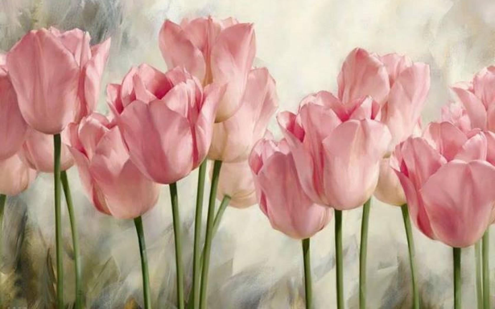 Pink Tulip Wallpapers  Wallpaper Cave
