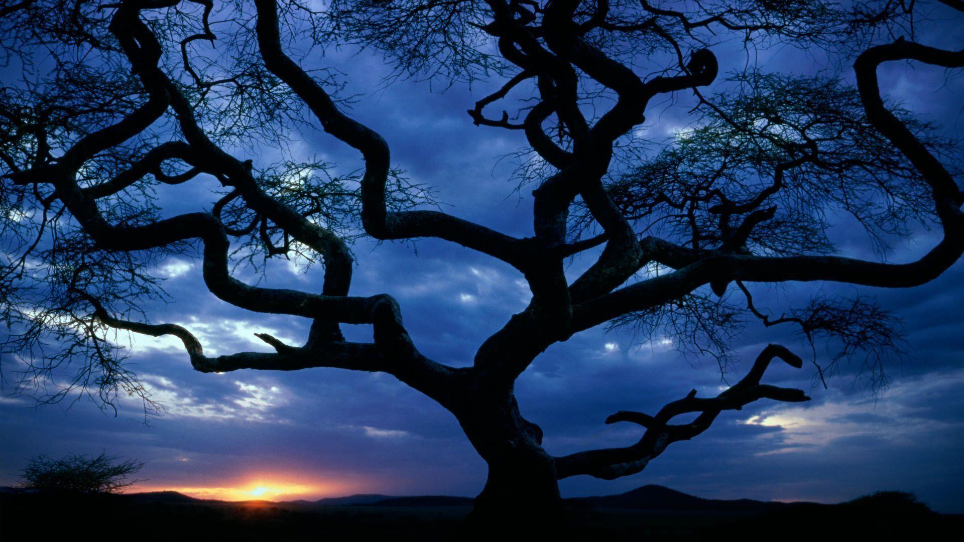 Serengeti National Park Safari Wallpaper