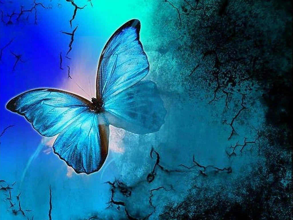 Butterflies Wallpapers 10021 HD Desktop Backgrounds and Widescreen ...