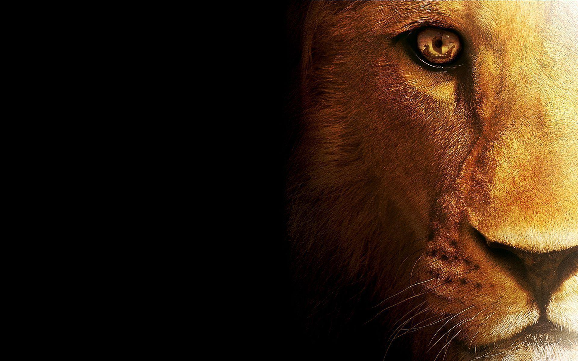 Lion Wallpapers Wallpaper Cave
