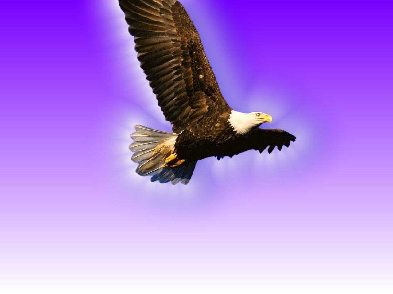 Гиф, картинка орла с надписью