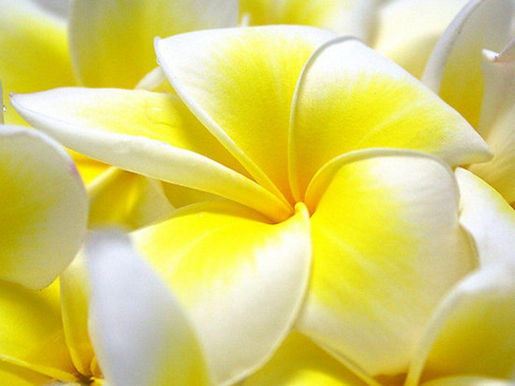 Flowers Wallpapers For Desktop Full Size Hd