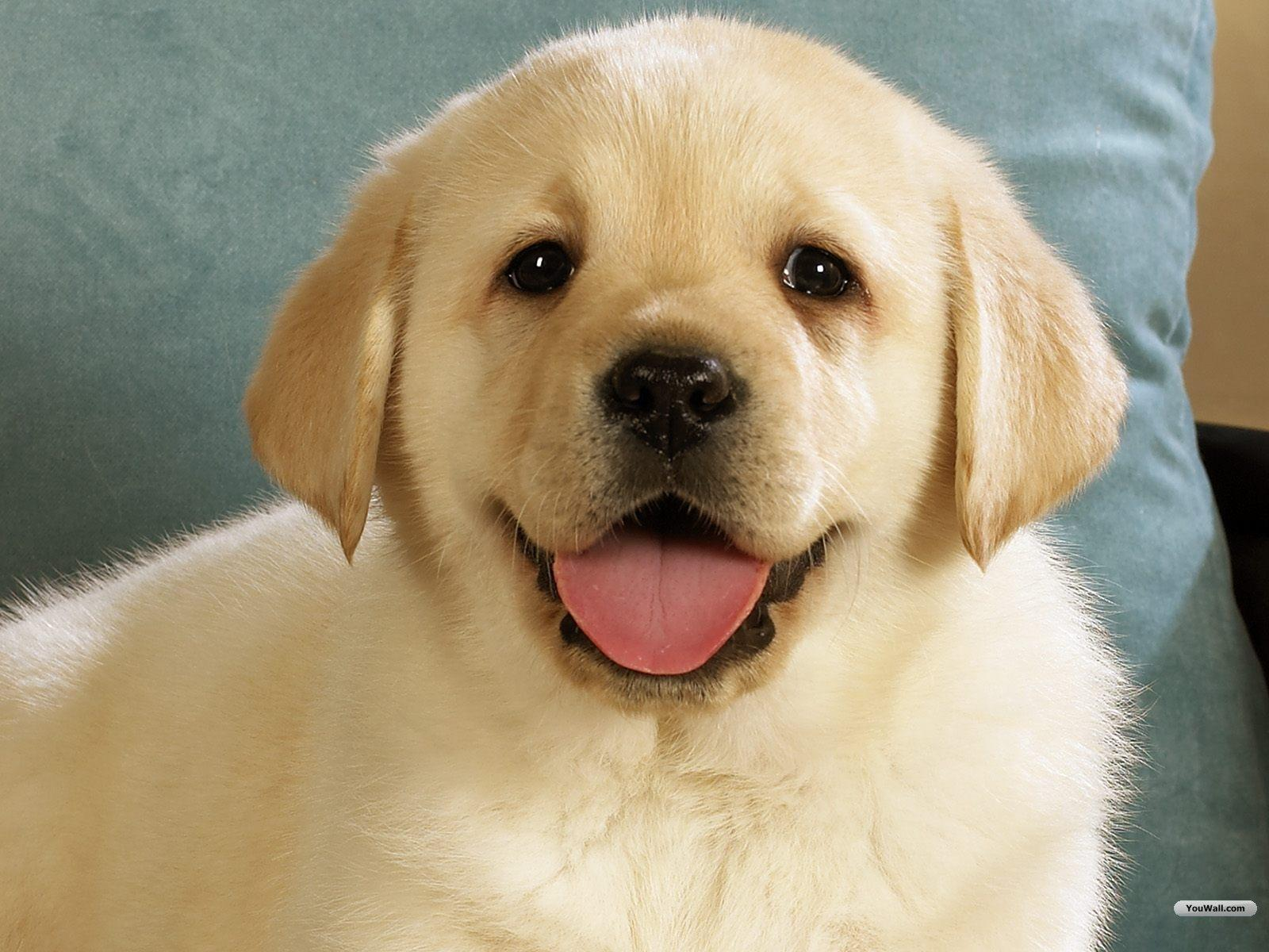 Youwall cute dog wallpapers wallpapers wallpapers free wallpapers