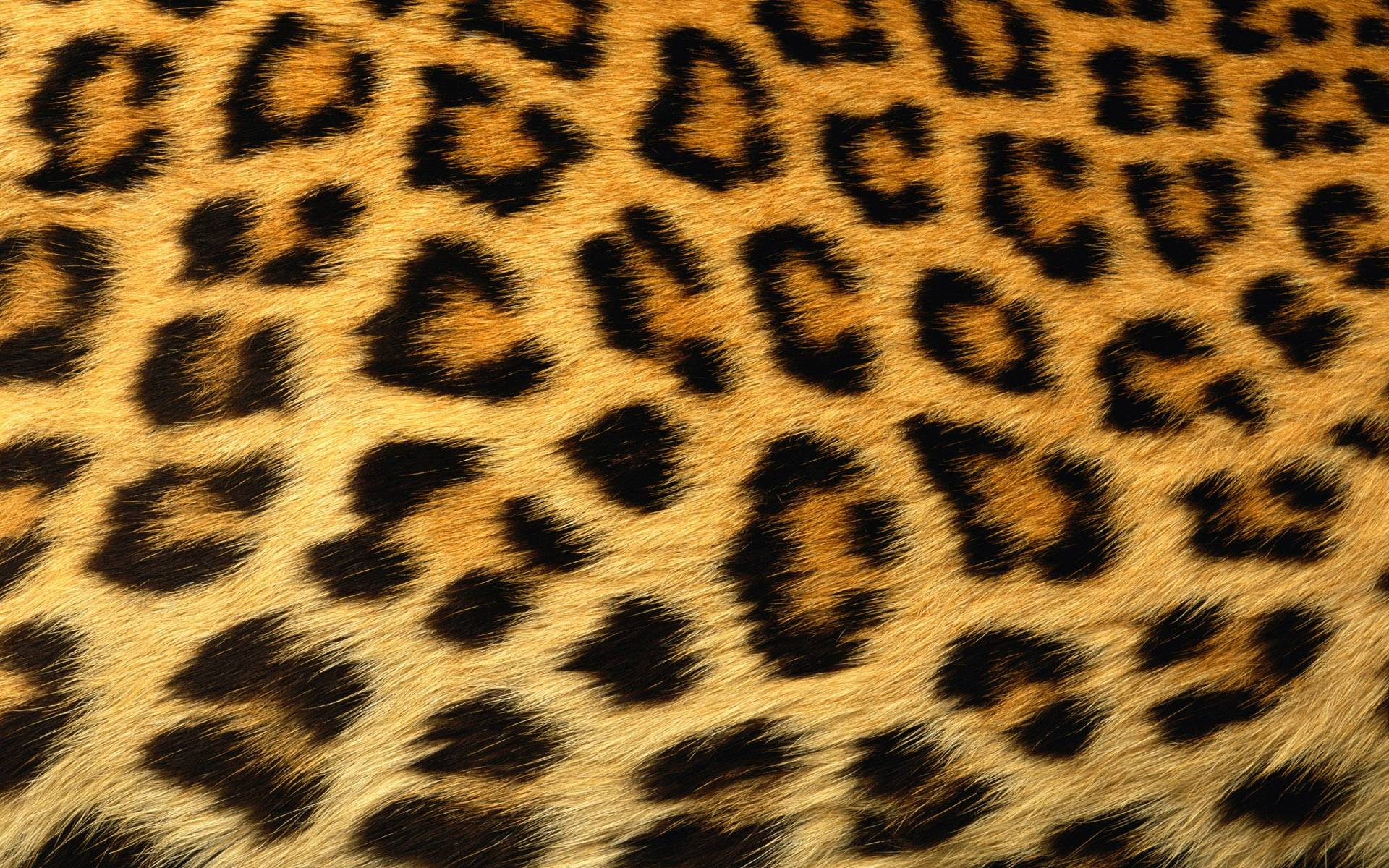 Leopard Print Wallpaper Bedroom Animal Print Wallpaper