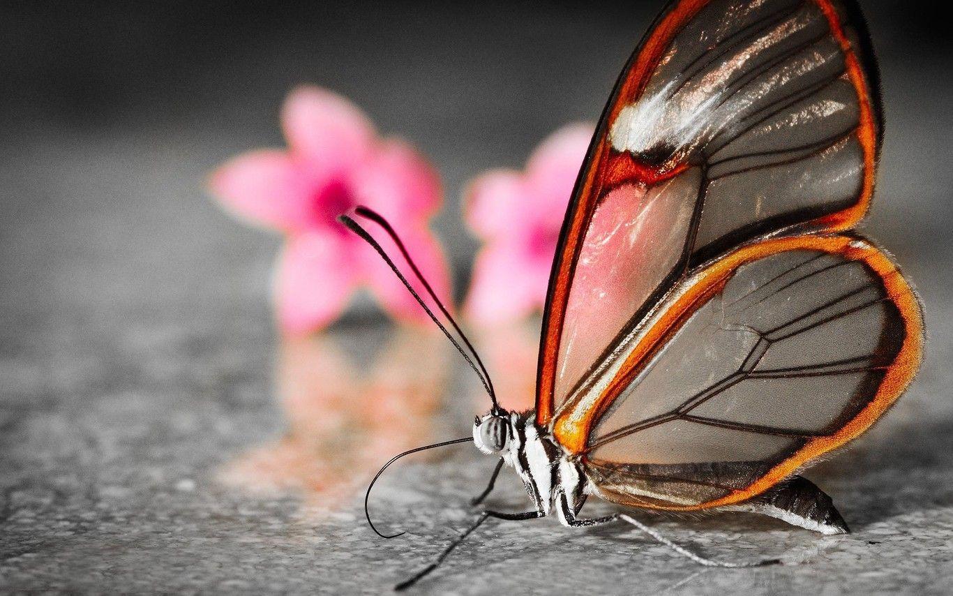 Shine HD Wallpapers: Butterflies Wallpapers HD