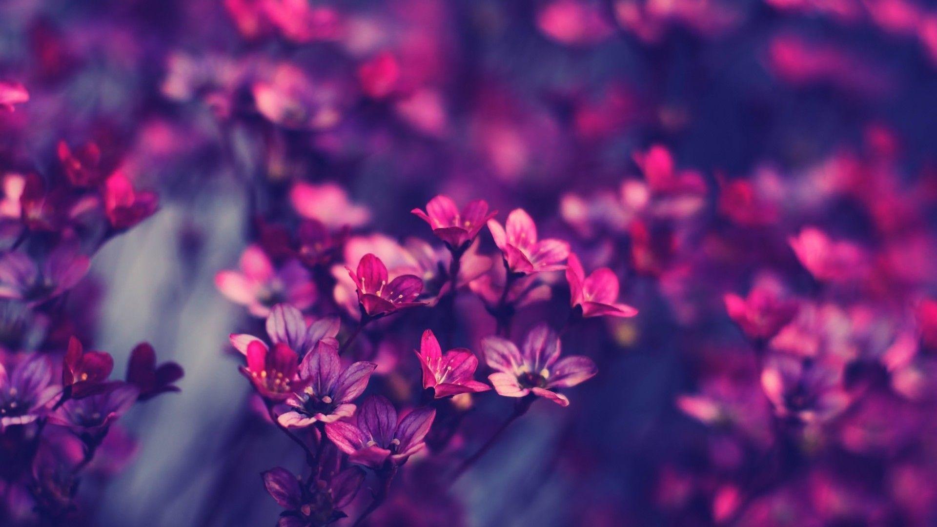 лучшие широкоформатные обои для рабочего стола цветы