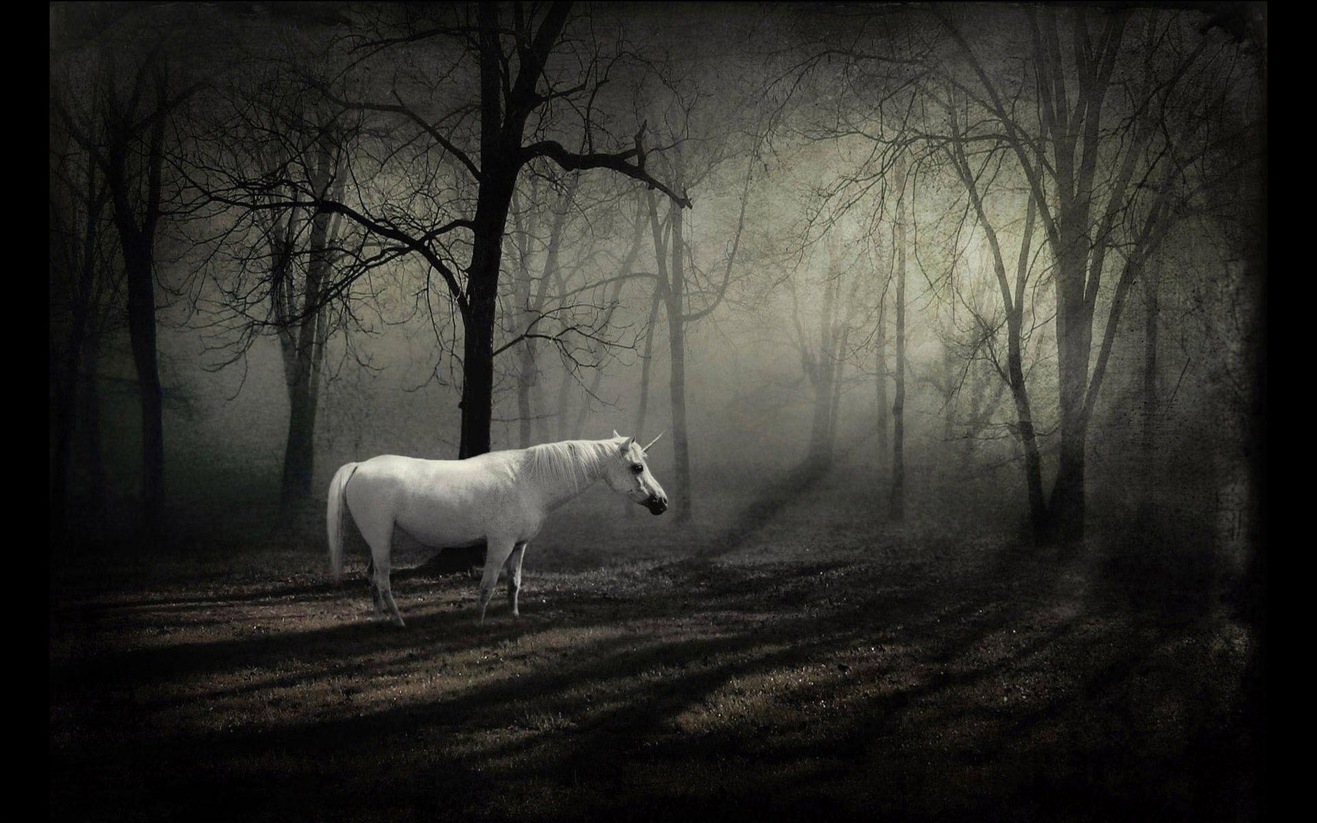 Dark Forest Background With Horse 13101 Full HD Wallpaper Desktop ...