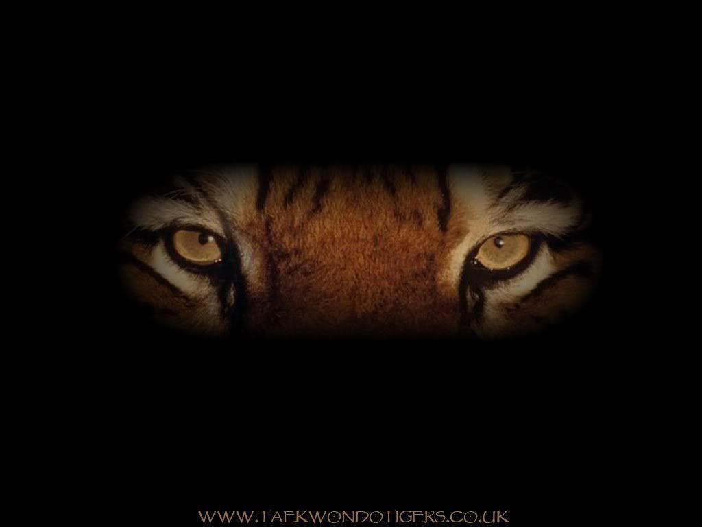 Tiger Wallpapers 44 Backgrounds HD