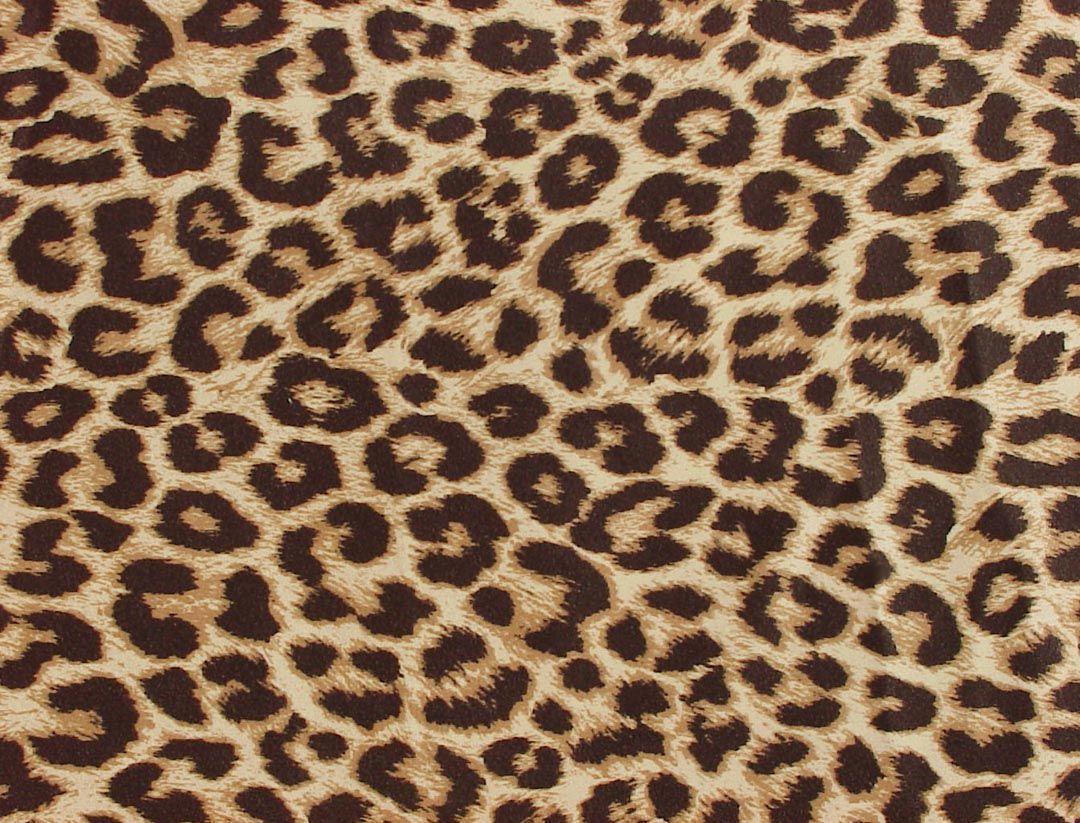 Leopard Print Wallpaper Animal Desktop Backgrounds Cave
