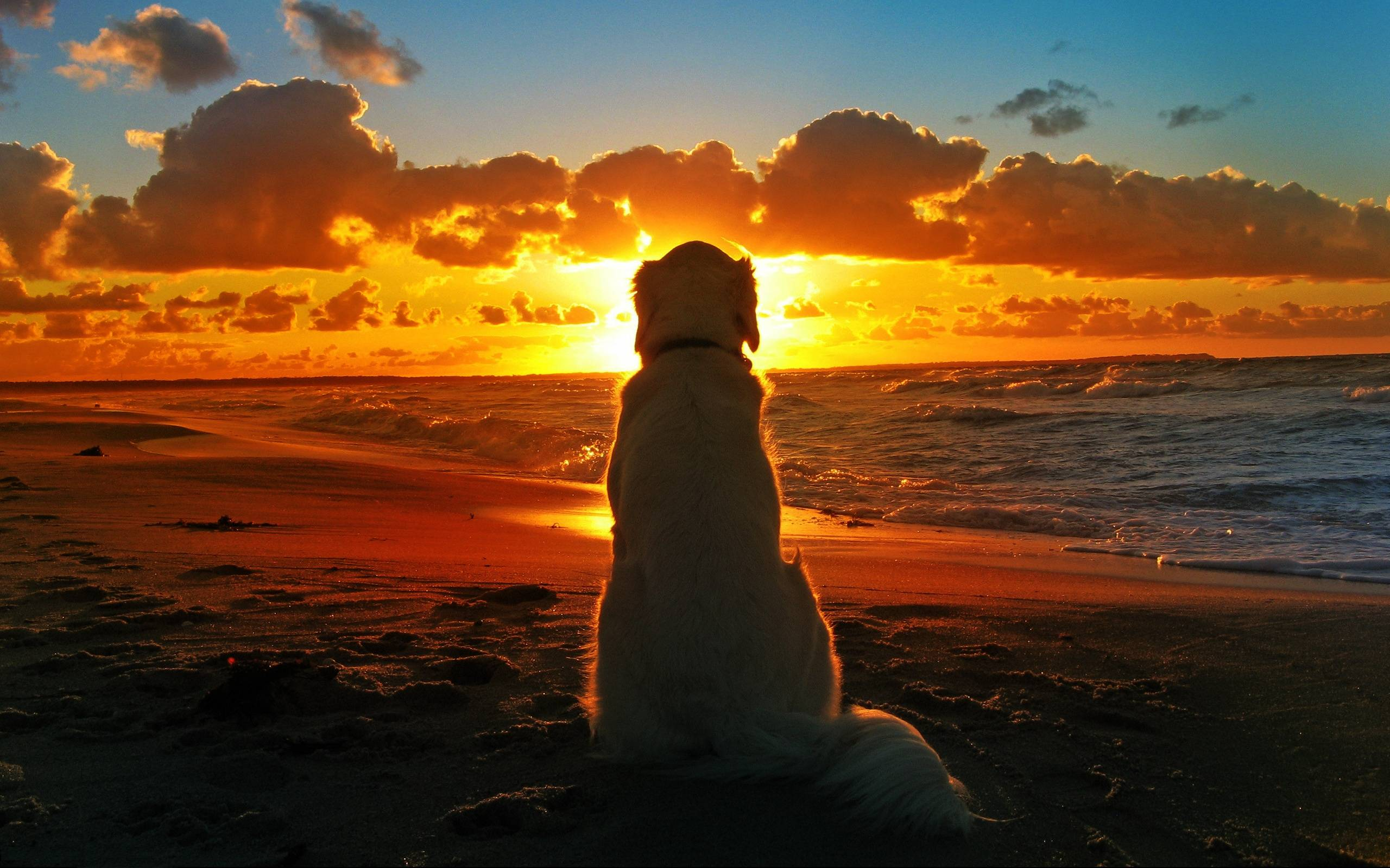 Labrador Retriever At Seashore - Animals Wallpapers