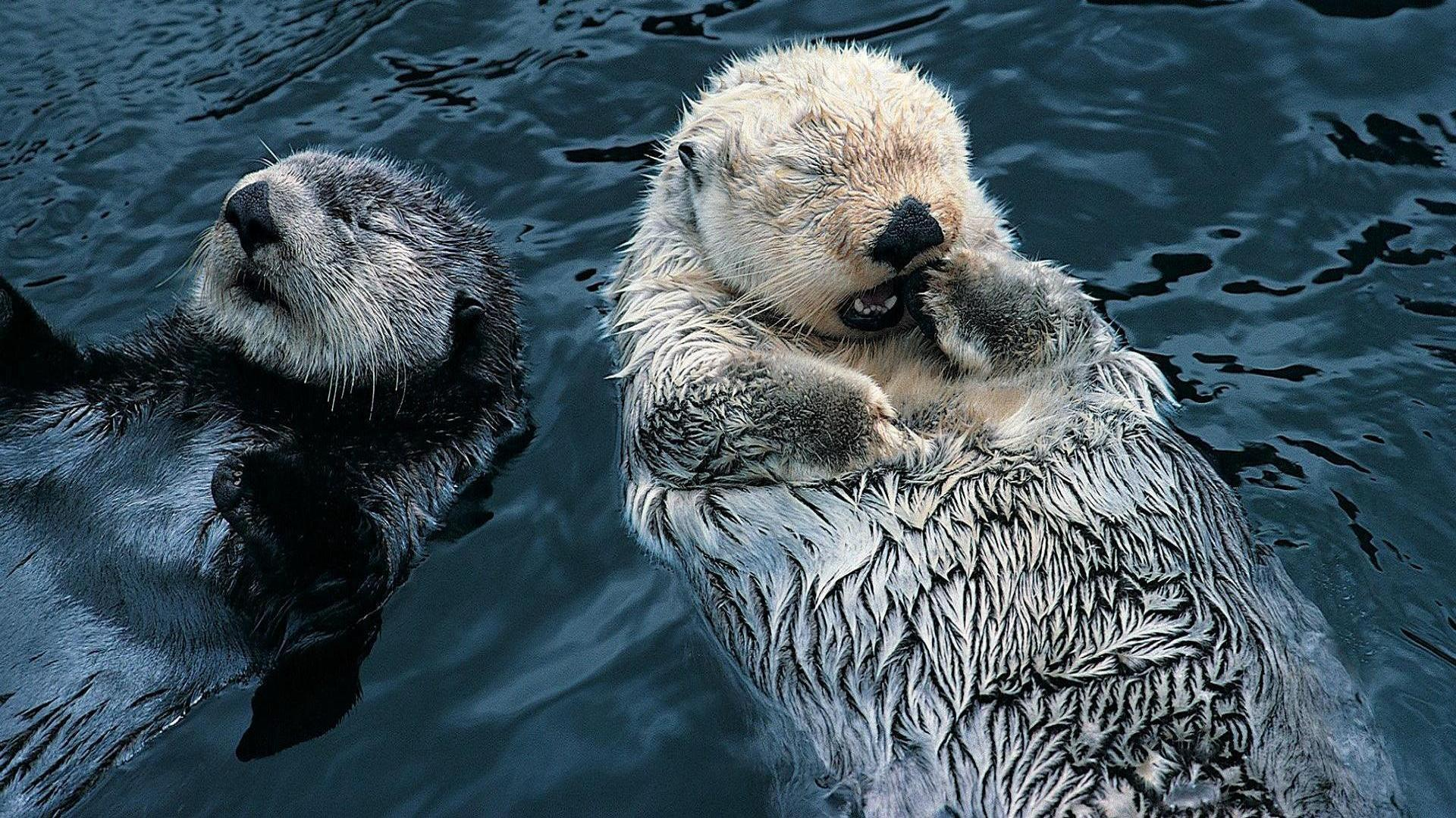 Cute Sea Otter Wallpaper - Viewing Gallery