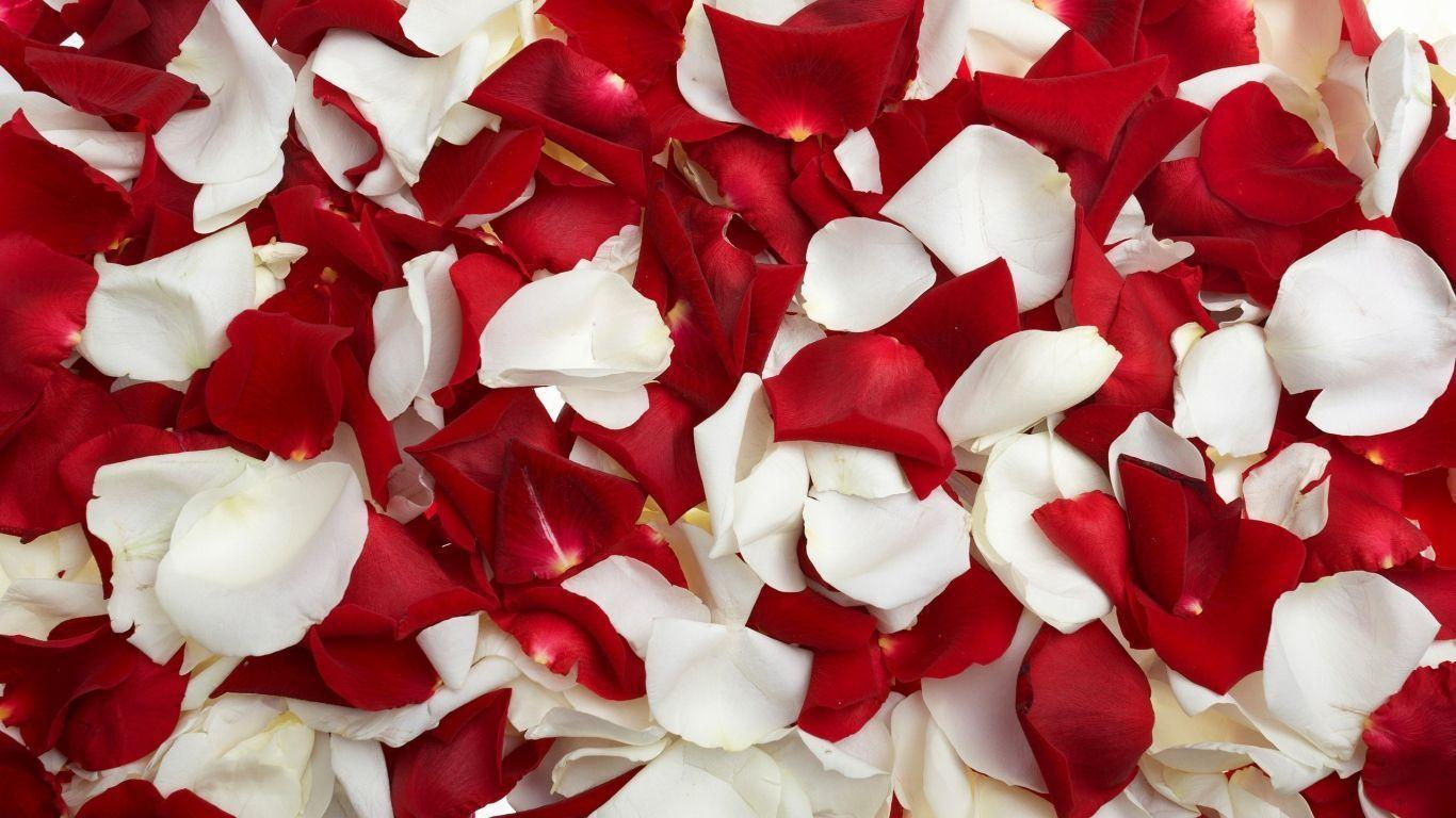 Flowers For > White And Red Roses Backgrounds