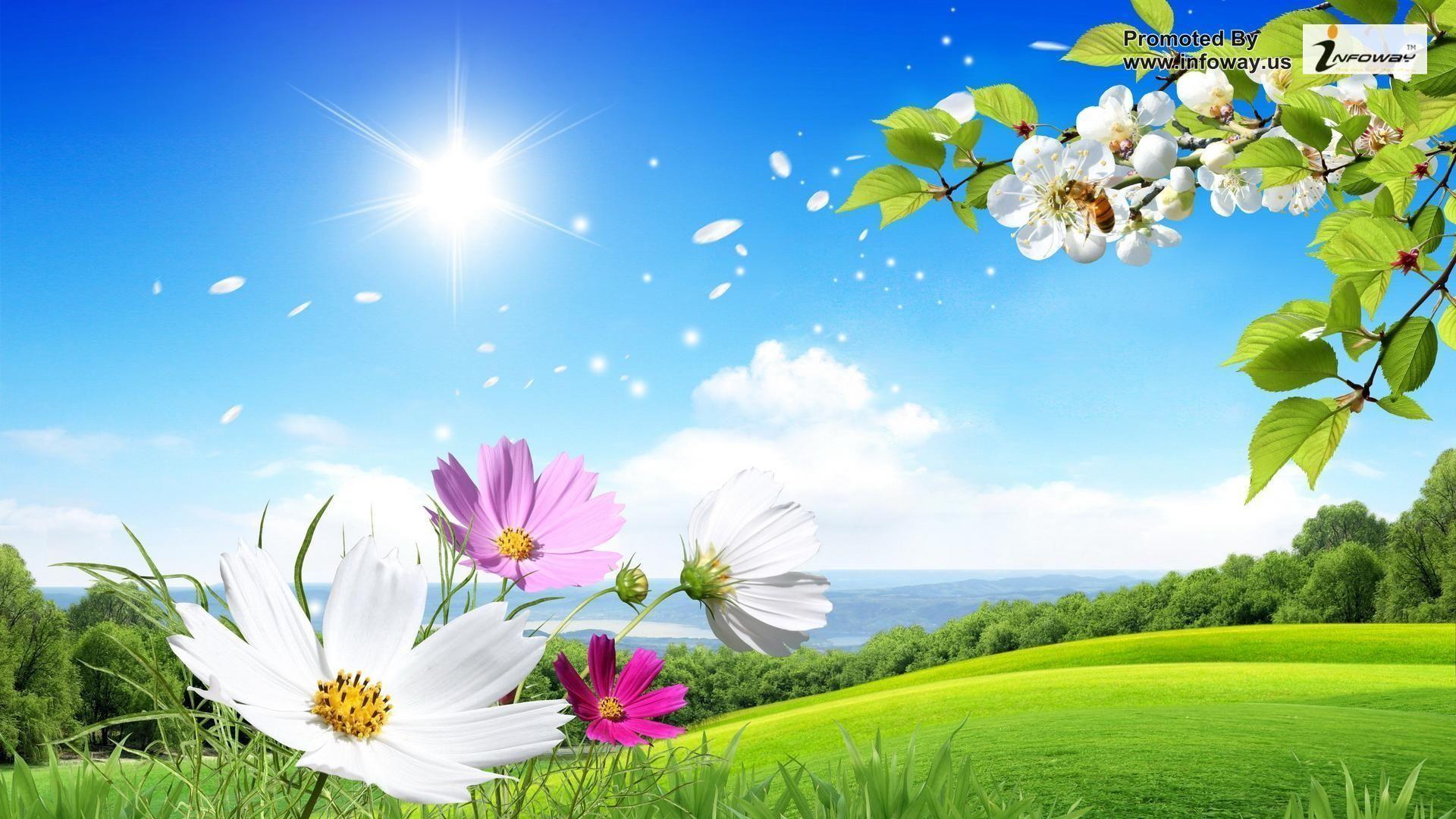 Flowers For > Desktop Wallpaper Flowers Full Size