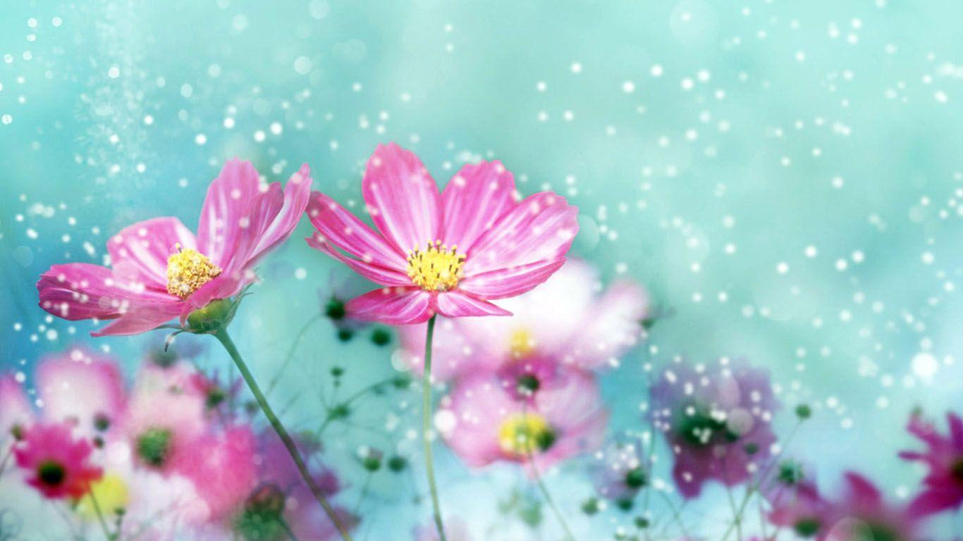 Hd Flowers Colorful Background 1 HD Wallpapers