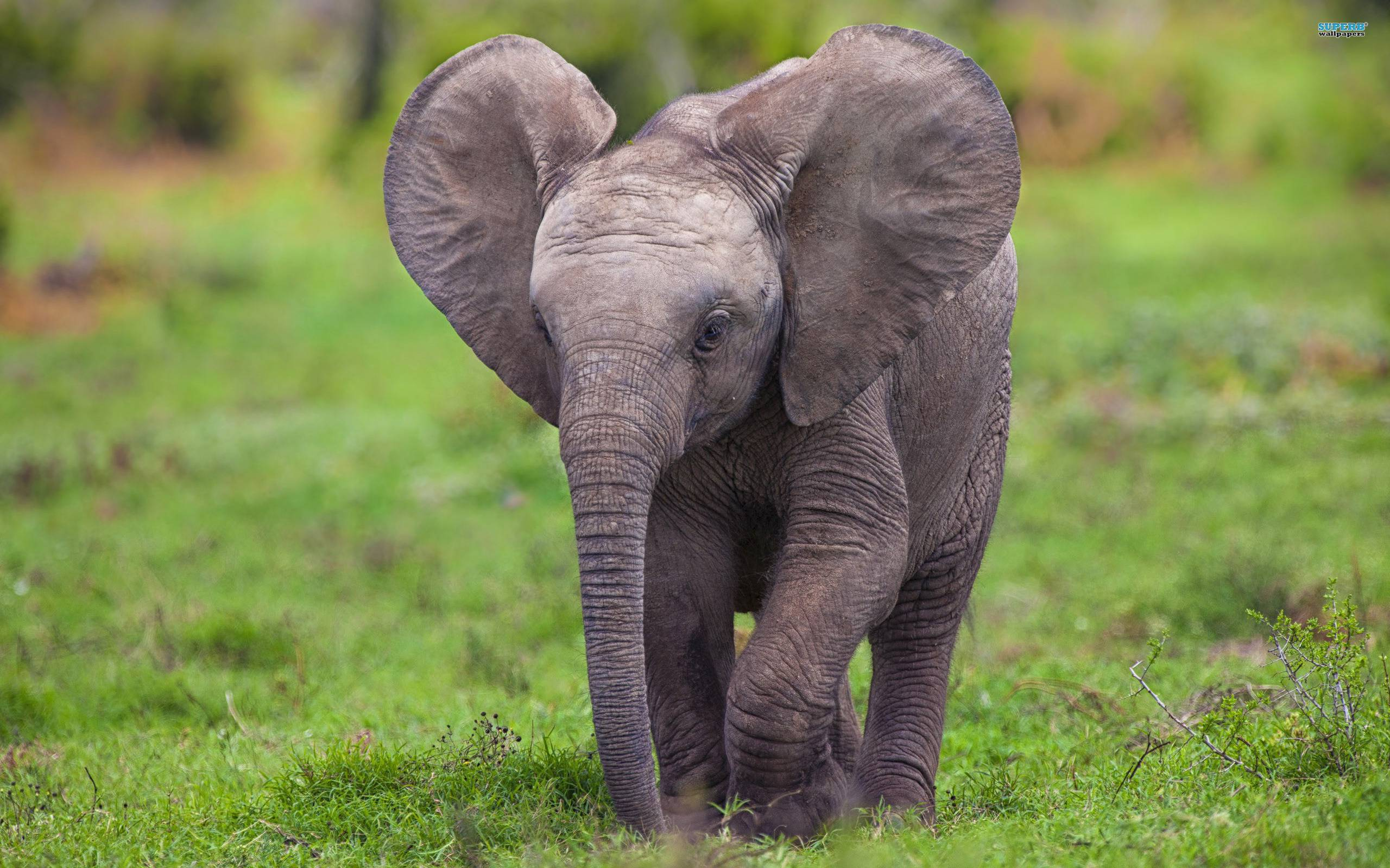 Baby elephant wallpapers wallpaper cave - Baby elephant wallpaper ...