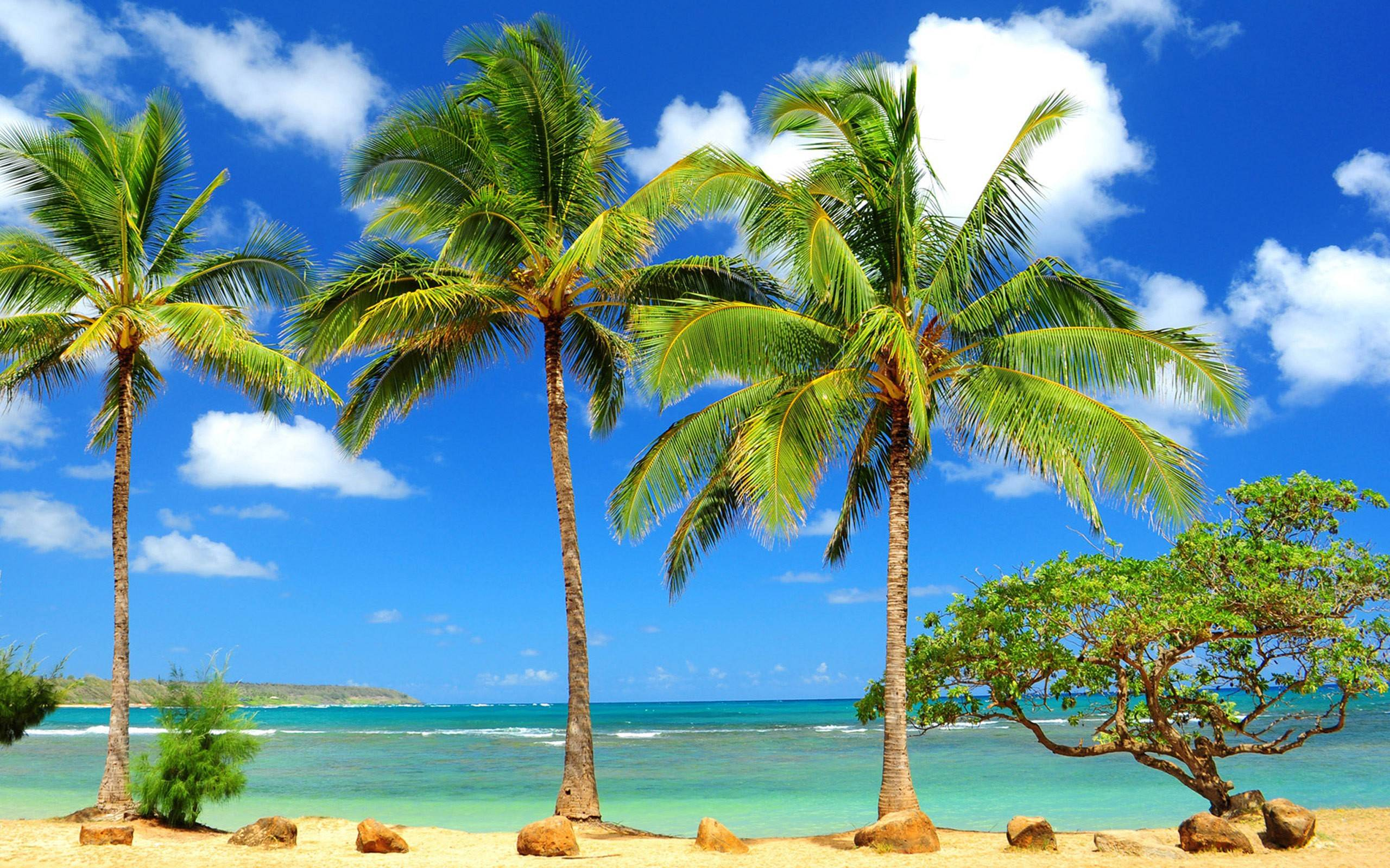 beach palm tree hd wallpaper free download hd free wallpapers