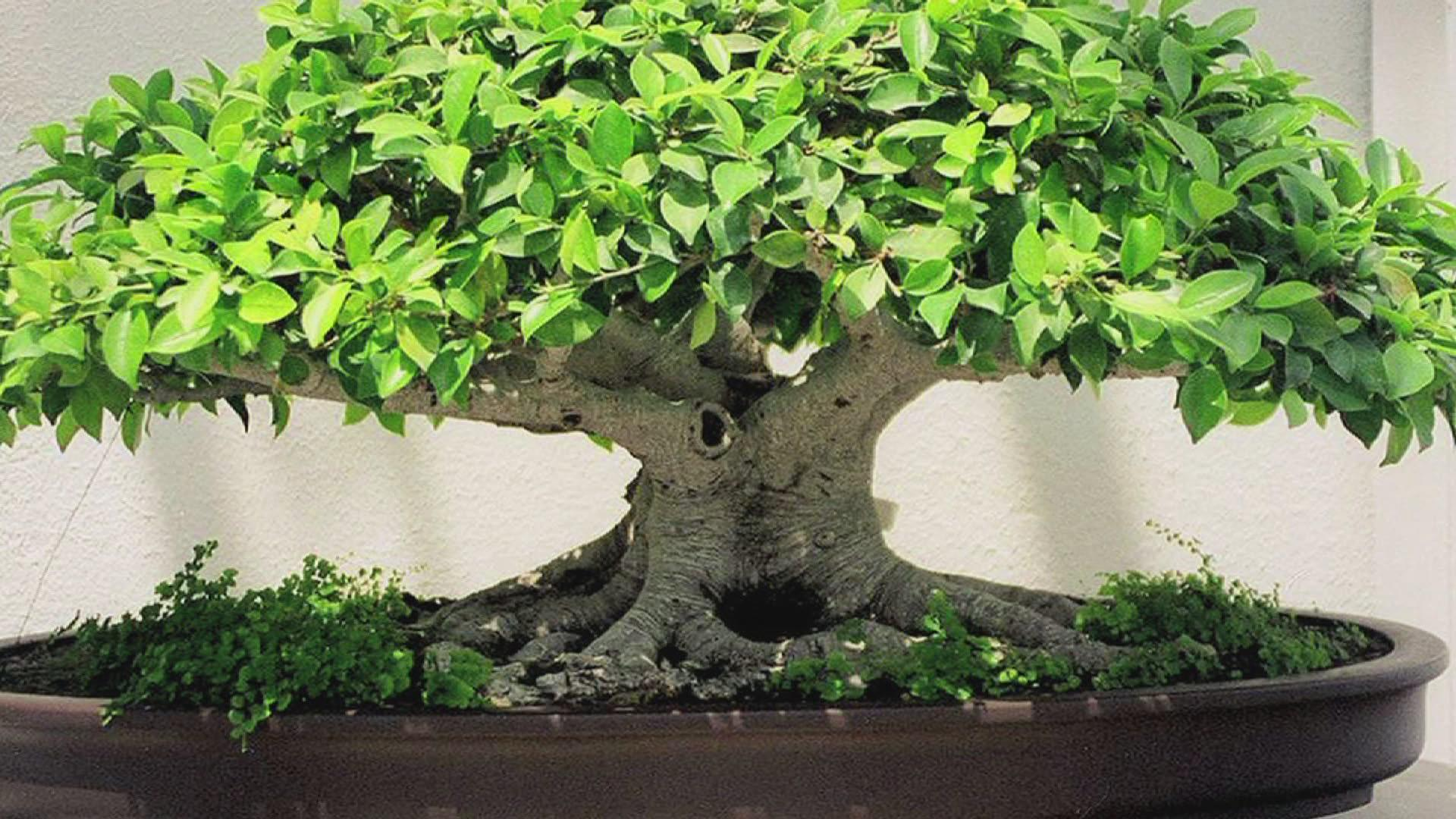 Images For > Flower Bonsai Wallpaper