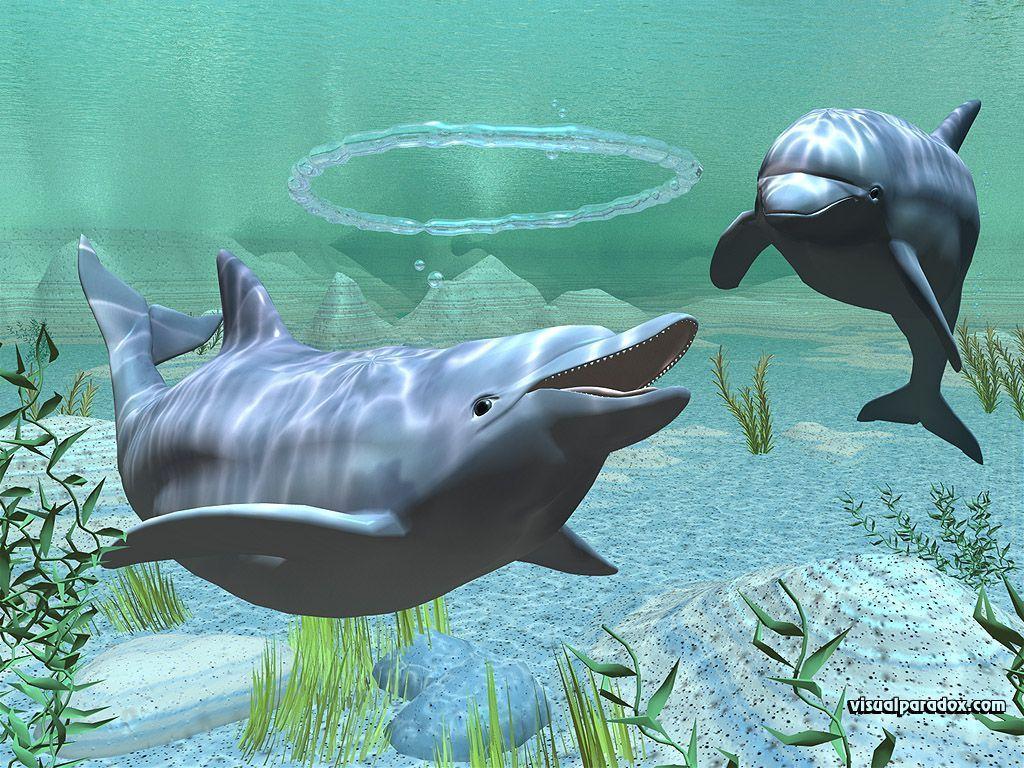 bottlenose dolphin wallpaper dolphins - photo #29