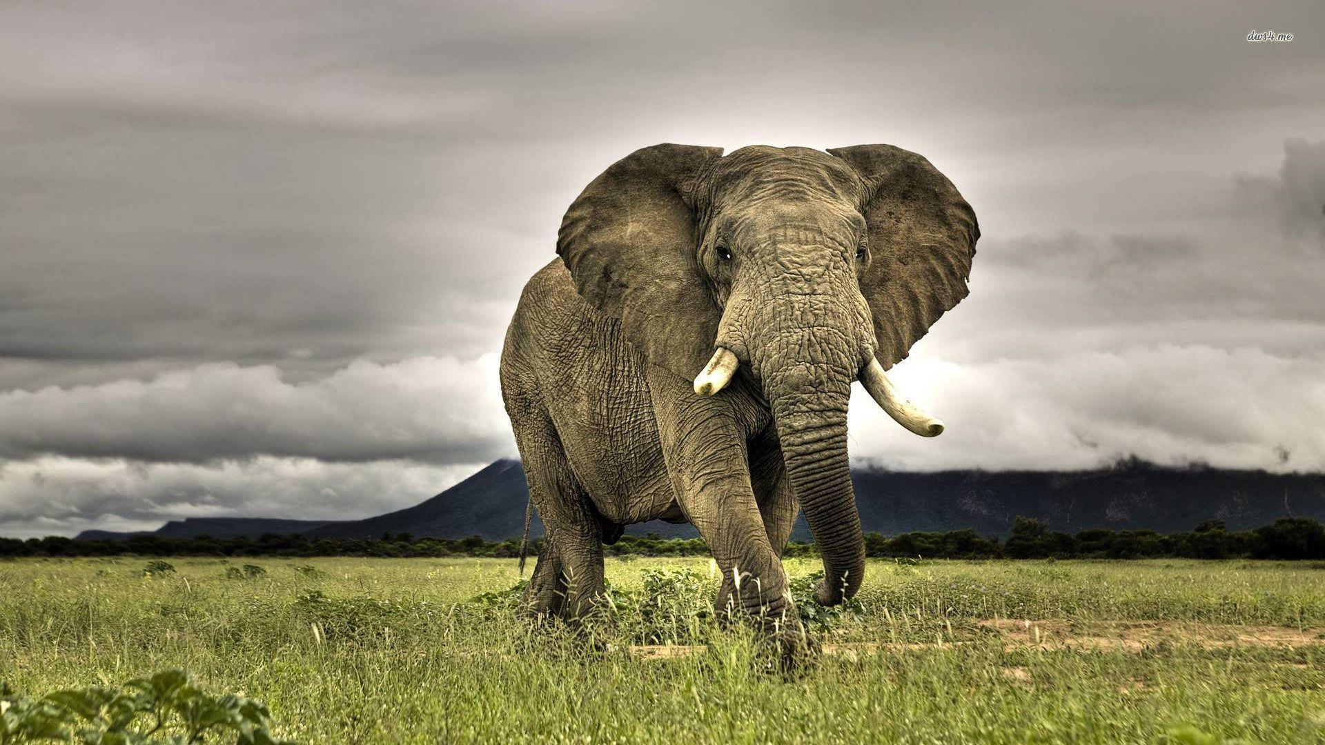 African Animals HD Wallpapers