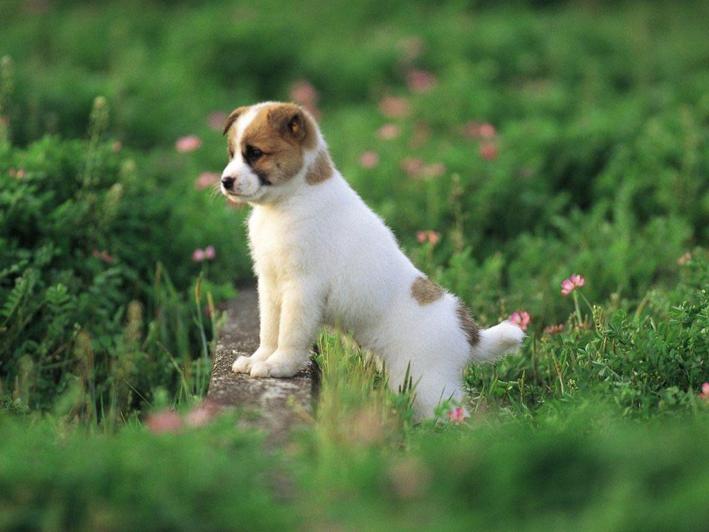 Cute Puppy Pictures Wallpapers  Wallpaper Cave