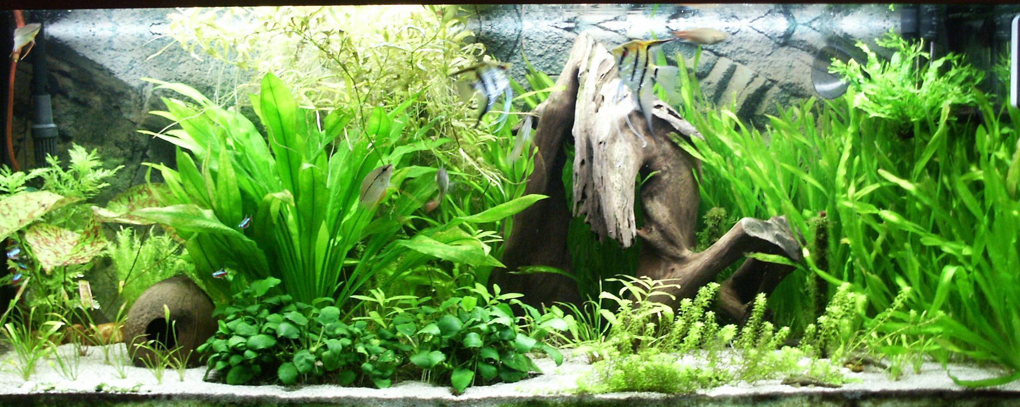 Essential advice for starting a home aquarium | Boneblogger ...