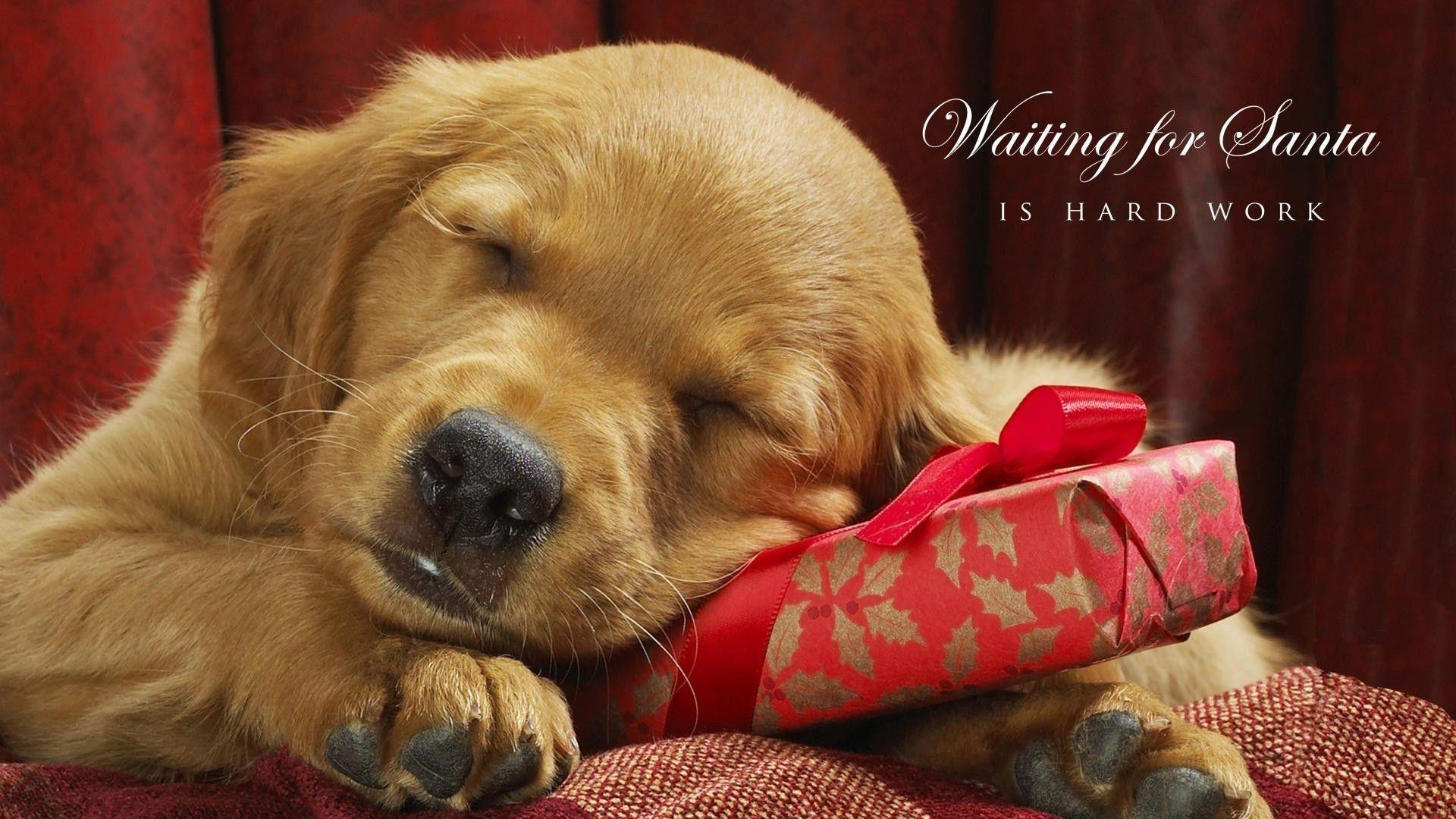 Free Funny Screensavers 2: Christmas Dog Wallpapers
