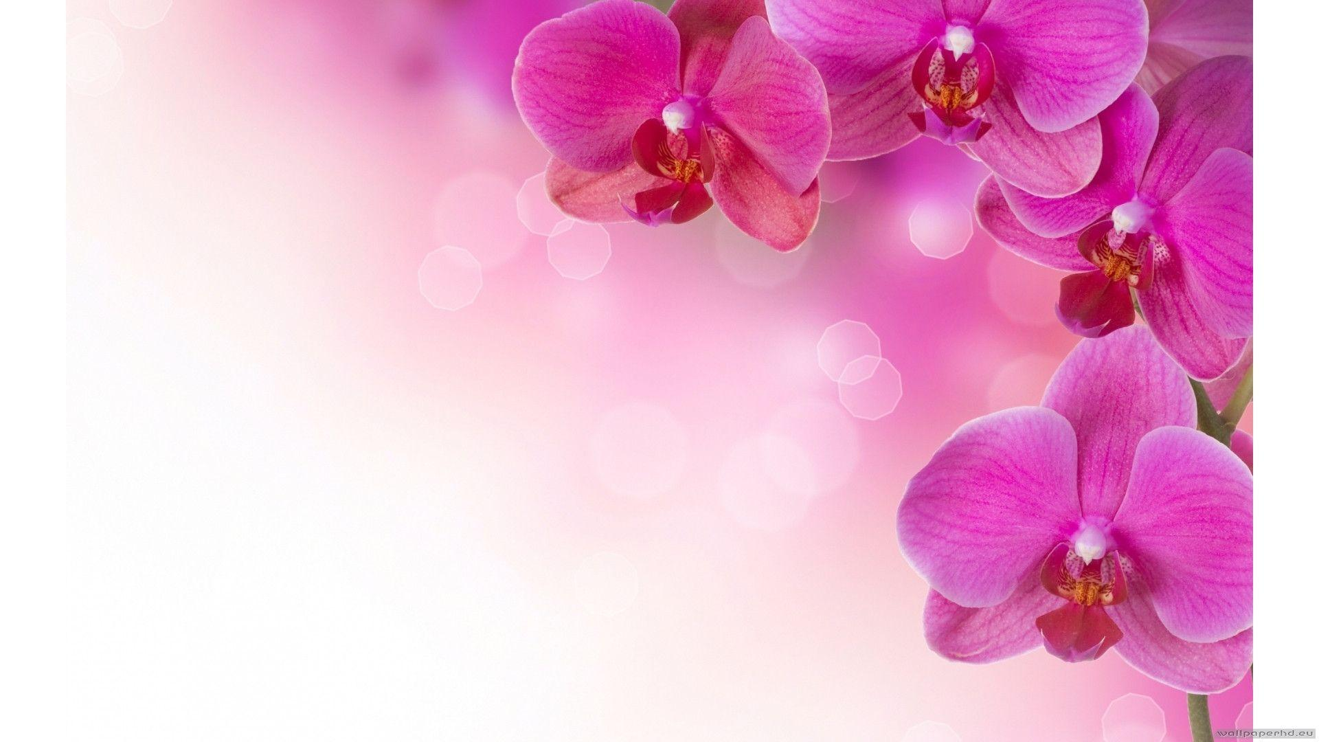 orchid wallpapers backgrounds images - photo #16