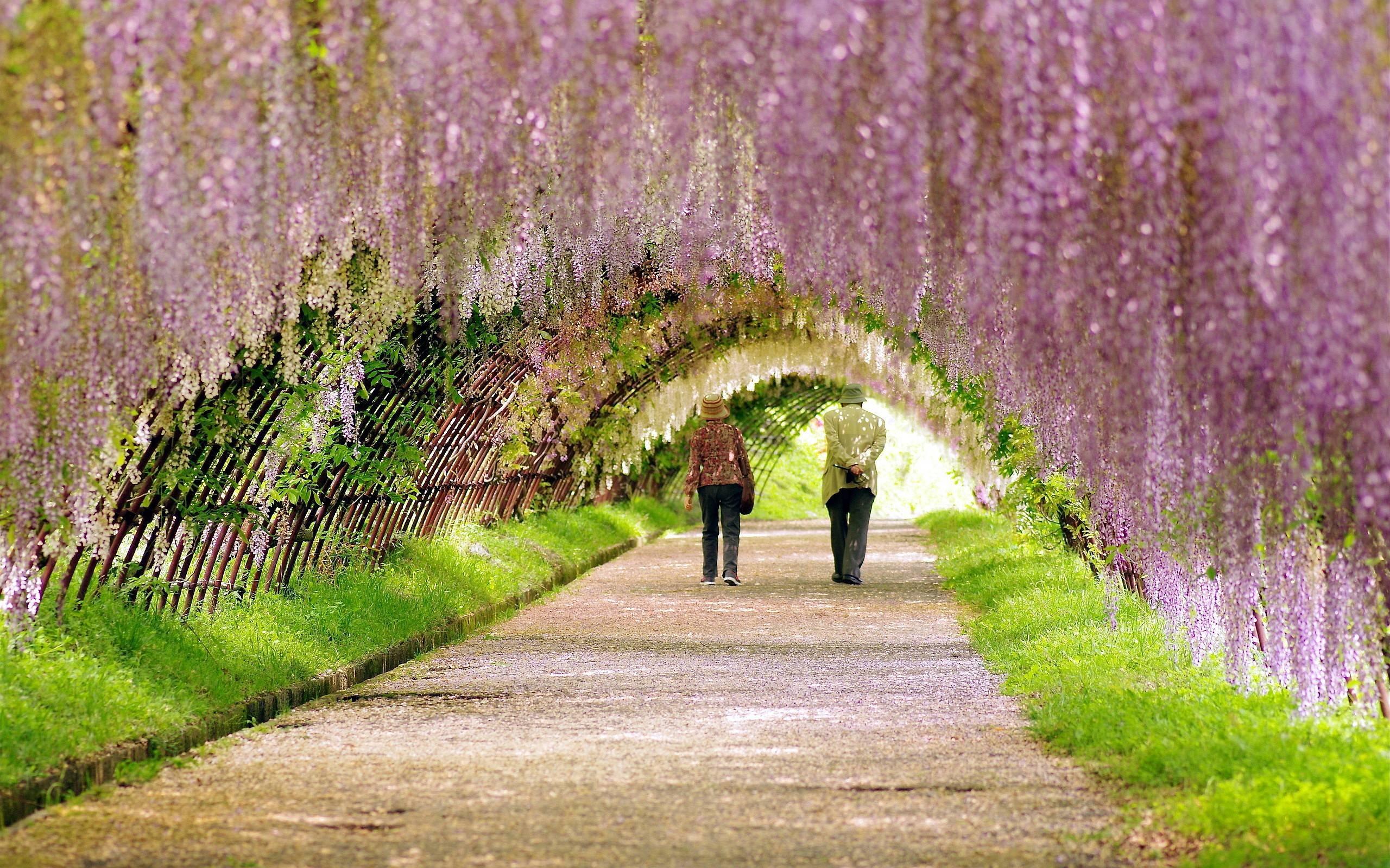 Spring Garden Wallpapers | Pictures
