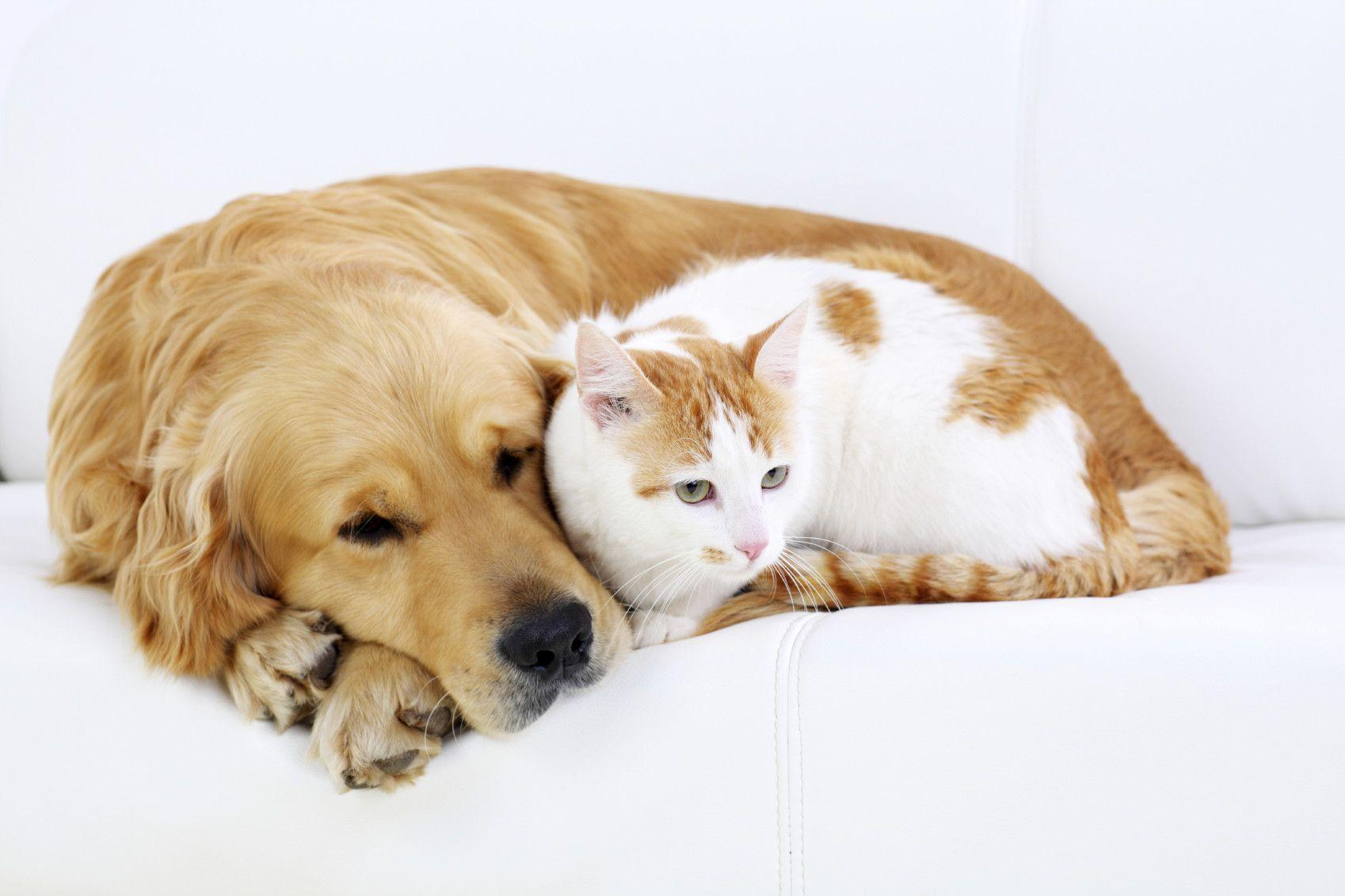Quote Cats Dogs Together