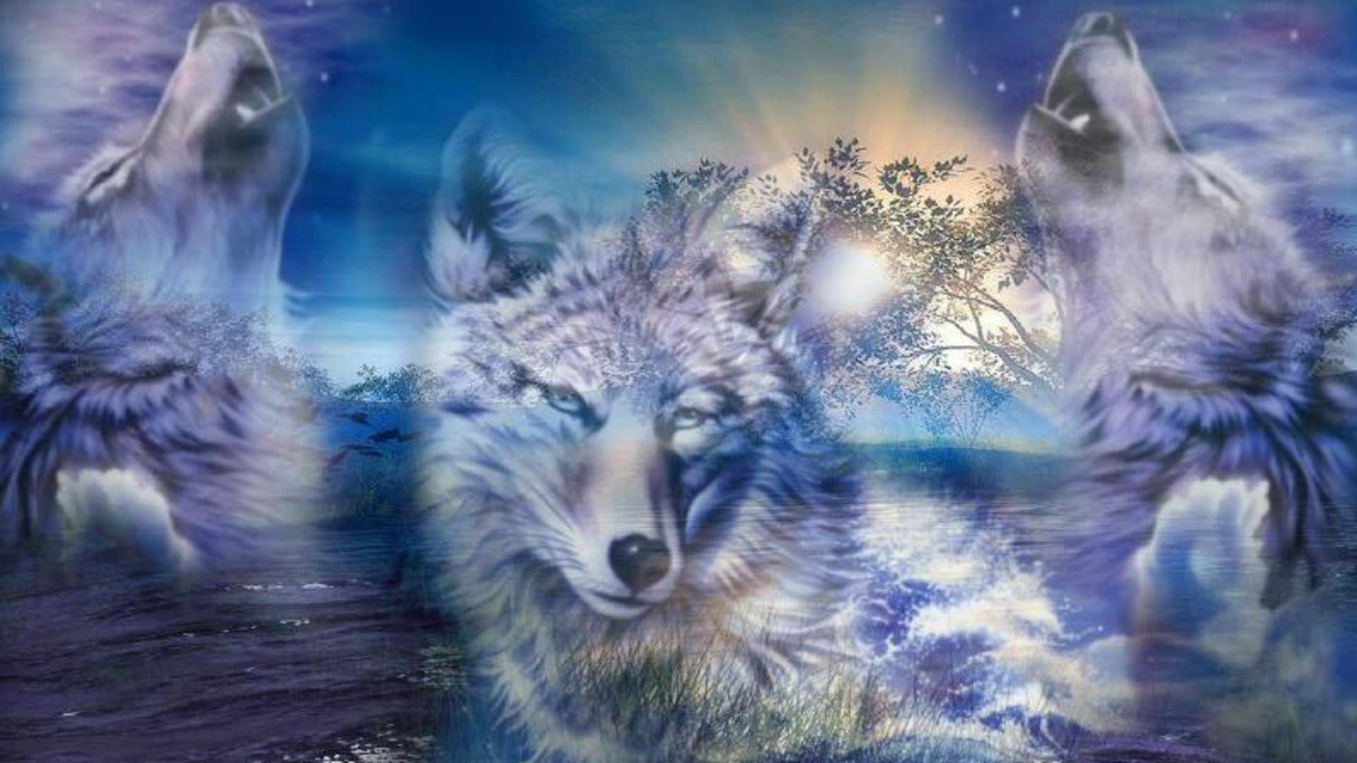 Wolf Wallpapers, Wolf Backgrounds, Wolf Images - Desktop Nexus