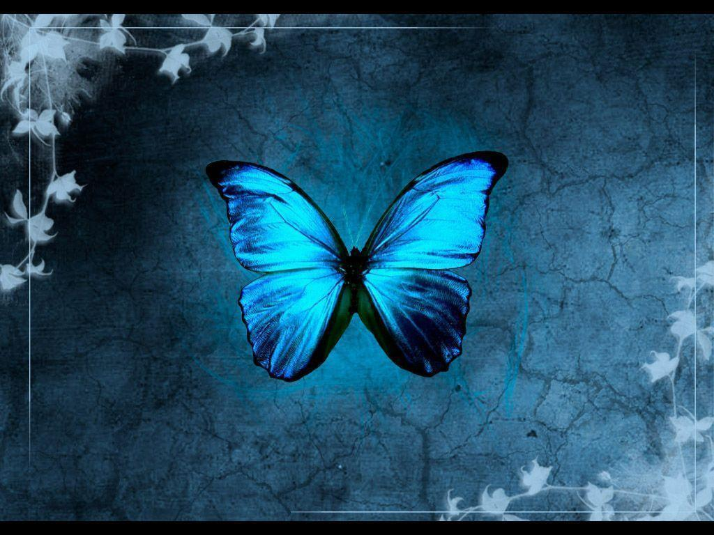 butterfly wallpapers flying - photo #30