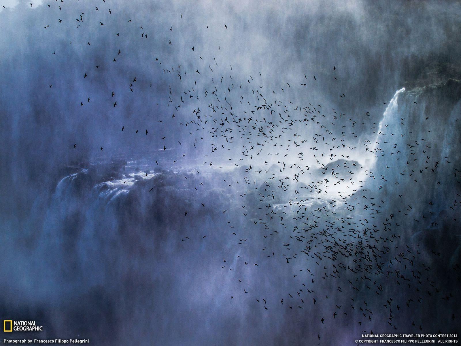 Swifts Picture -- Iguazu Falls Wallpaper -- National Geographic ...