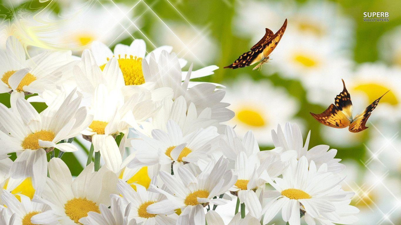 Butterflies on daisies wallpapers