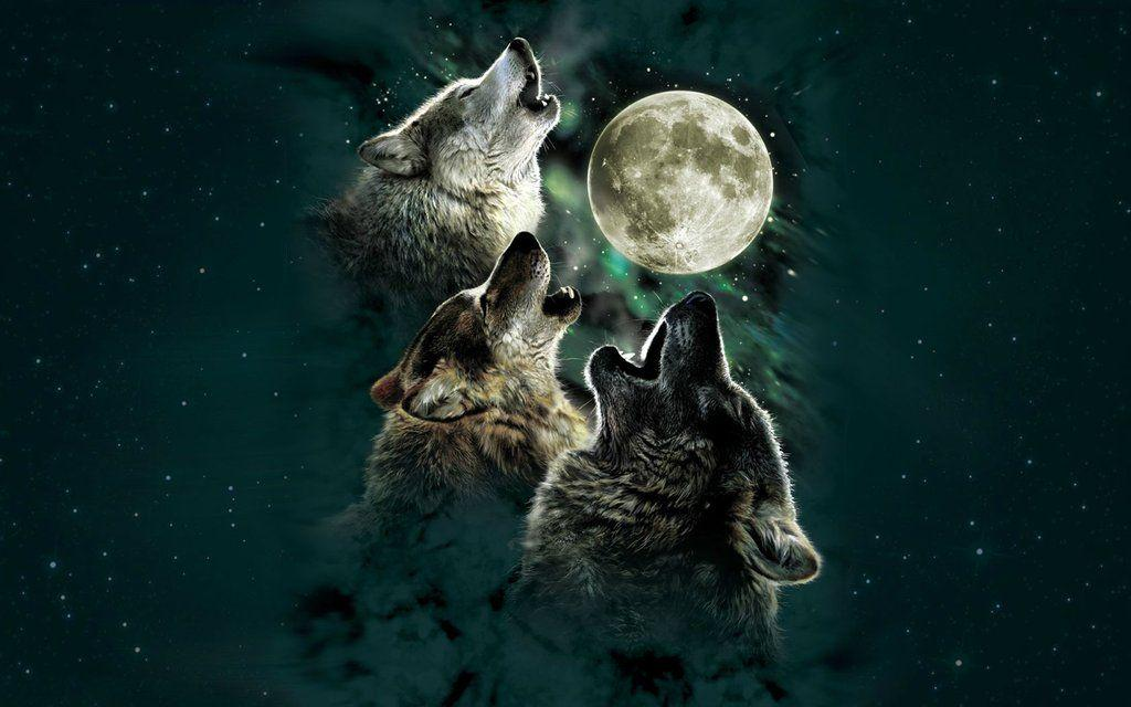 Wolves Howling Wallpaper Hd