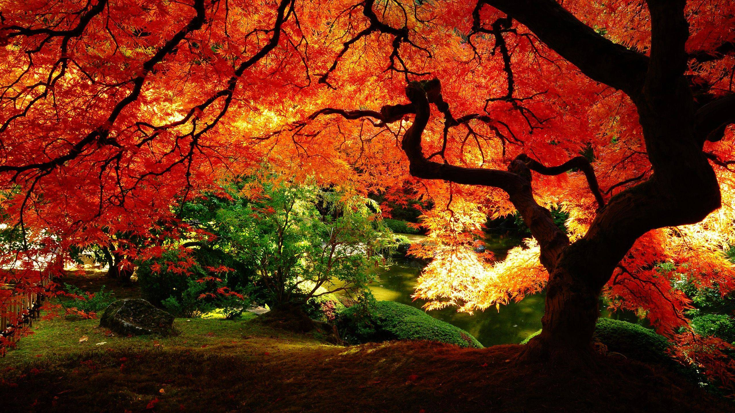 Beautiful Autumn Wallpapers Wallpaper Cave