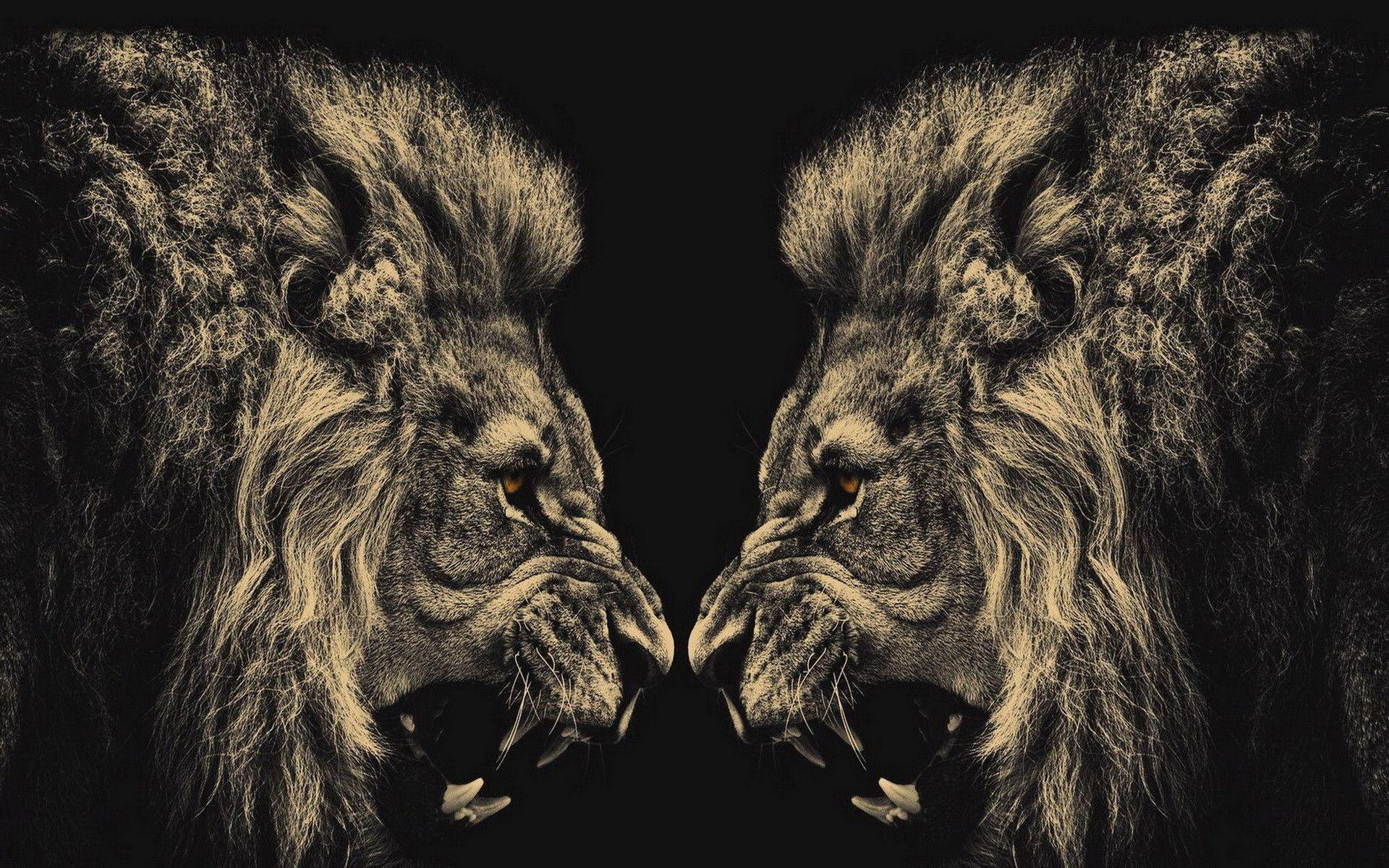 764 Lion Wallpapers | Lion Backgrounds