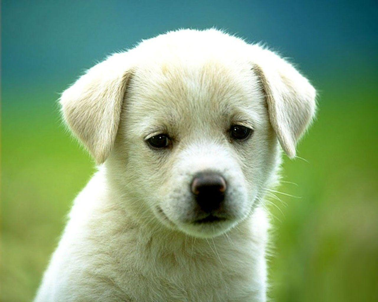Puppy Backgrounds For Computer Wallpaper Cave