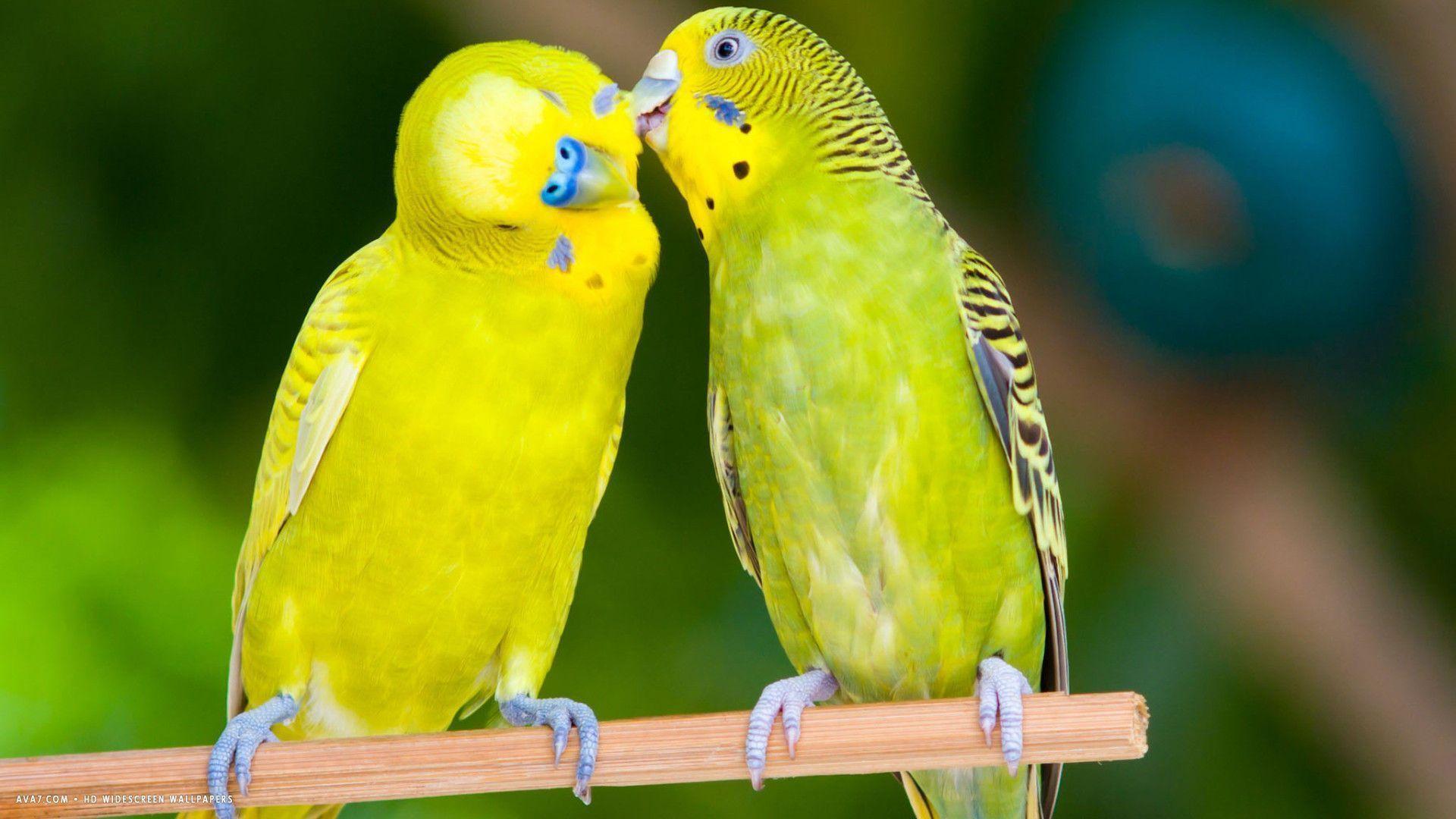 Love Birds Pictures Download: Wallpapers Of Love Birds