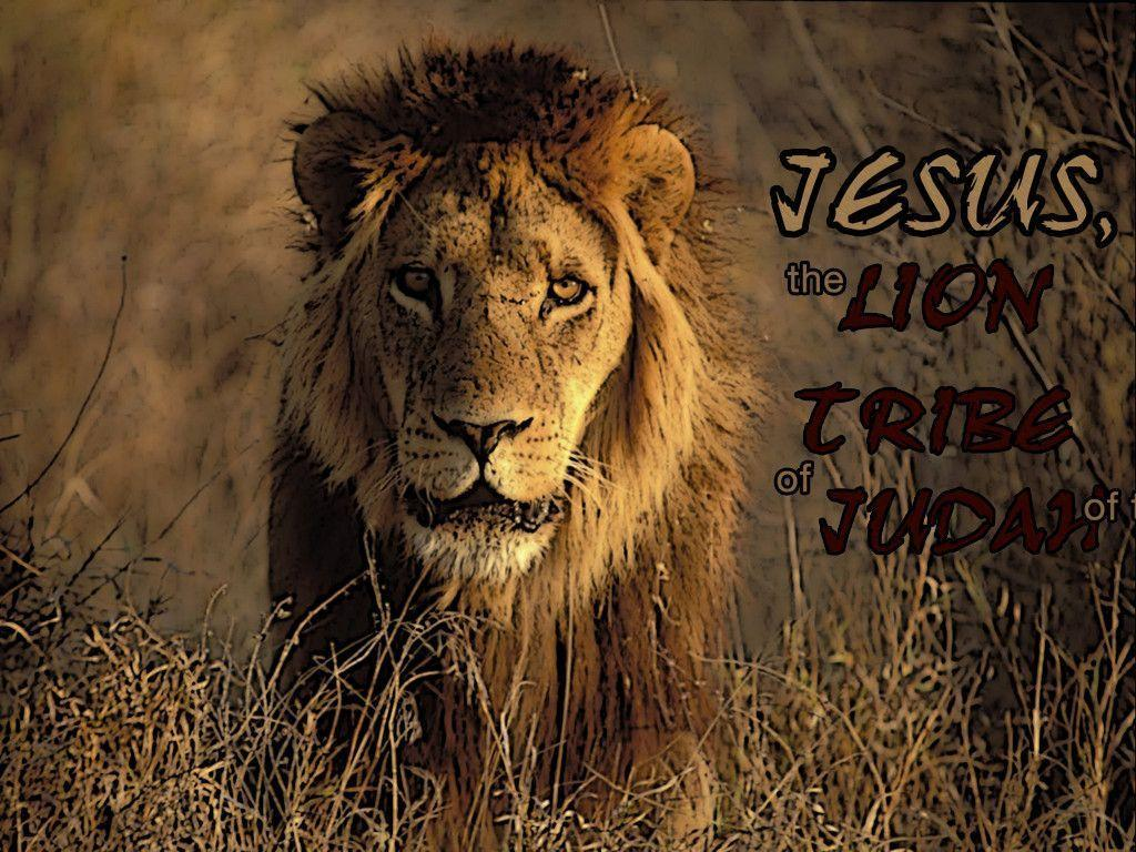 Image For > Jesus Lion Wallpapers