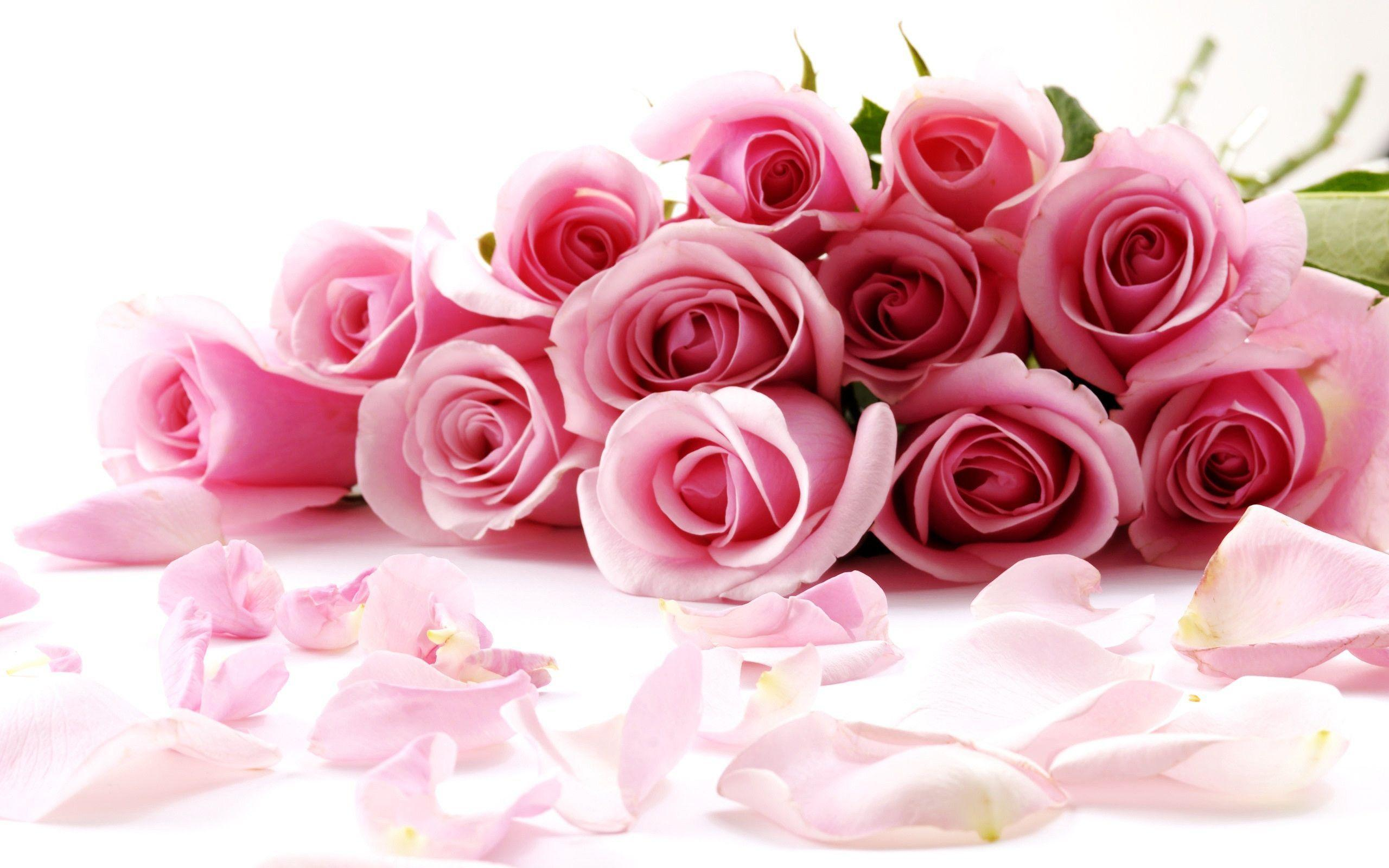 Rose flowers wallpapers wallpaper cave rose flower wallpapers full hd wallpaper search mightylinksfo
