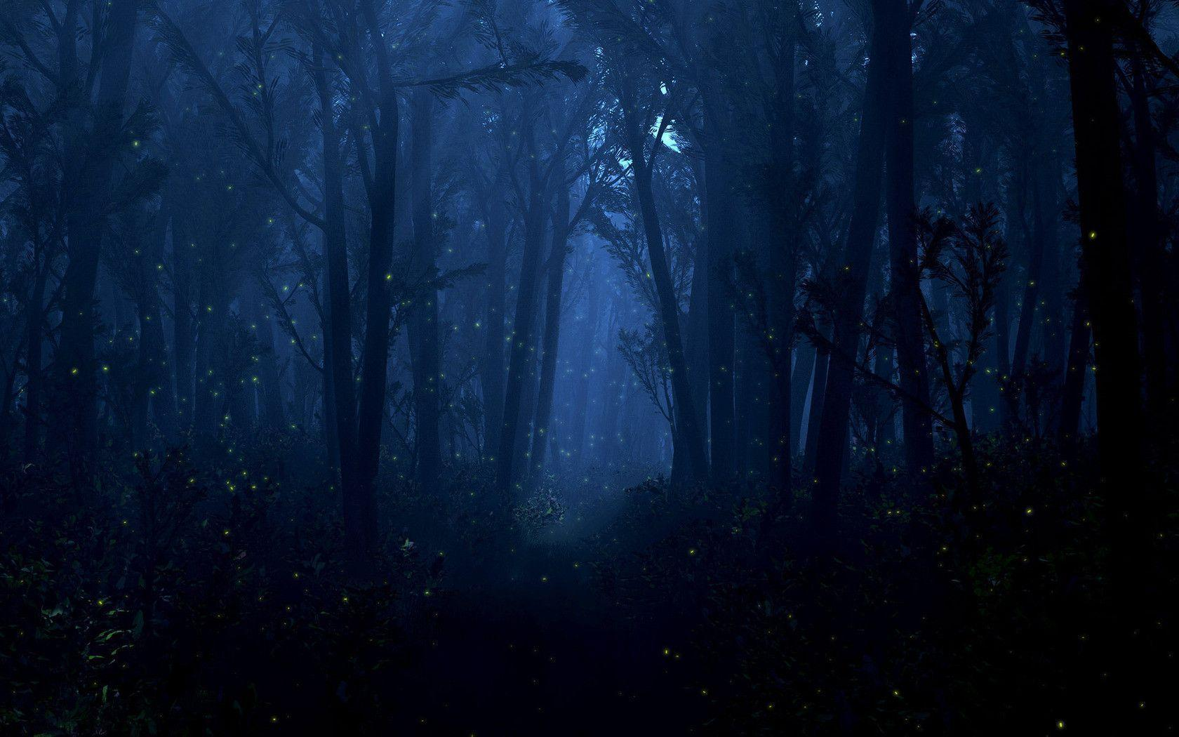 Forest Fireflies Pictures