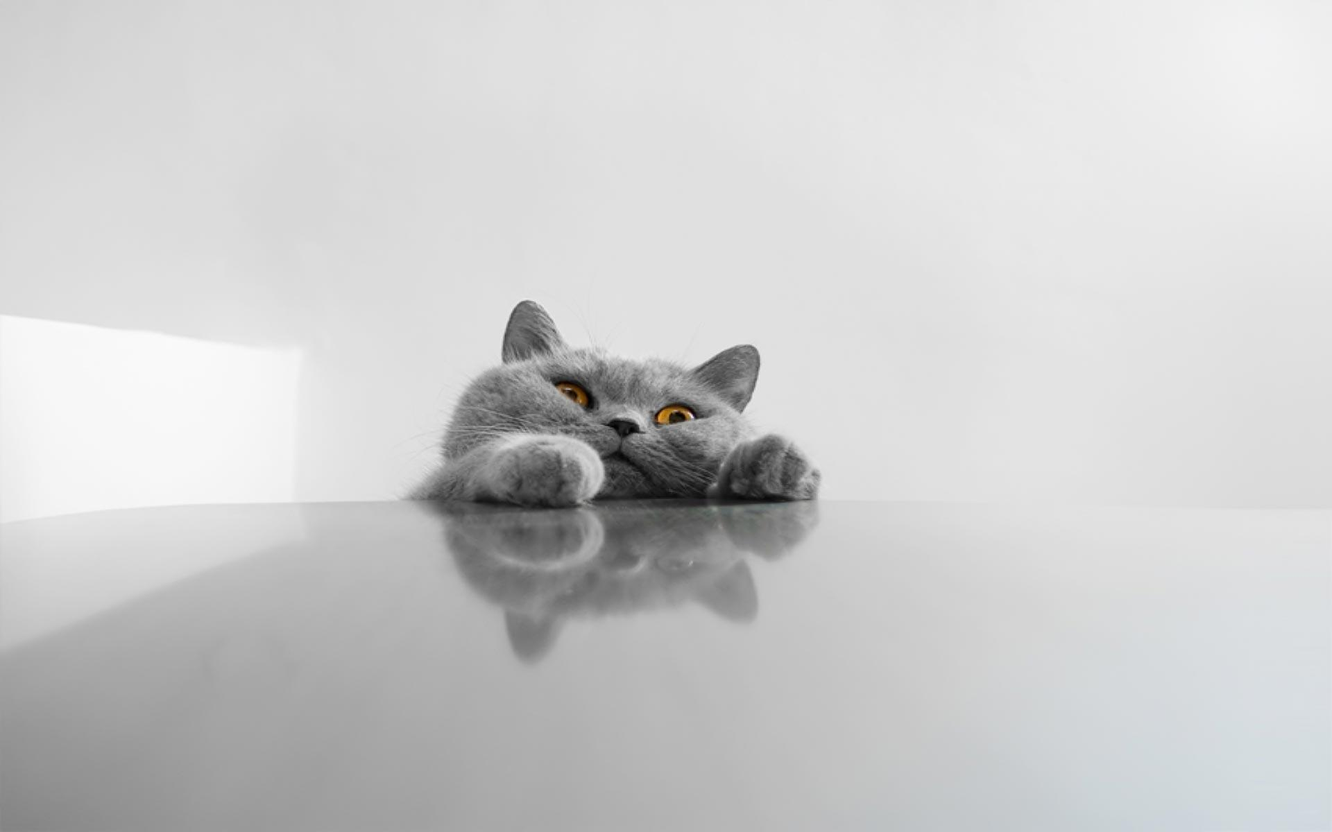funny cat desktop wallpapers   wallpaper cave