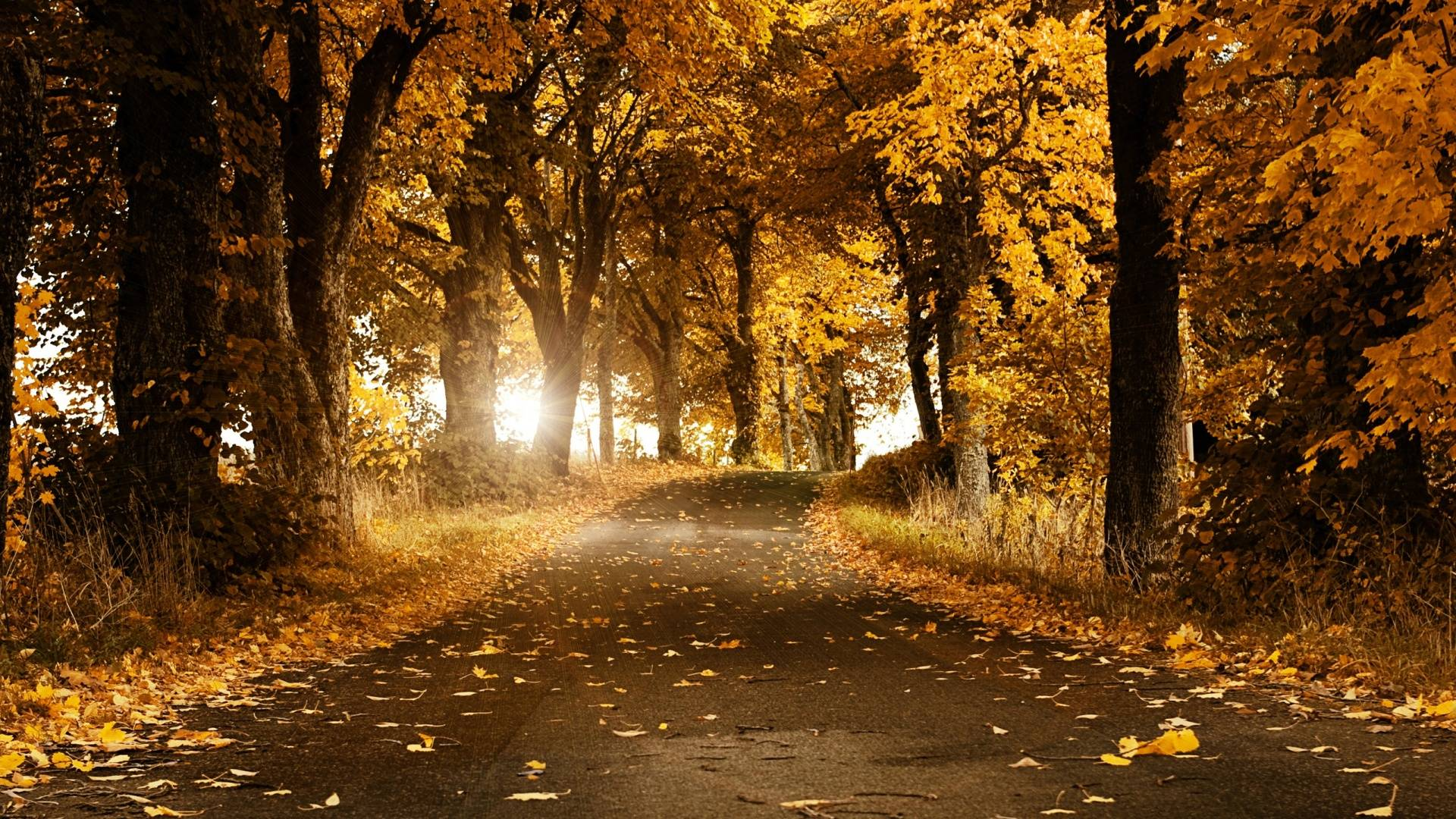 Autumn HD Wallpaper 1920x1080