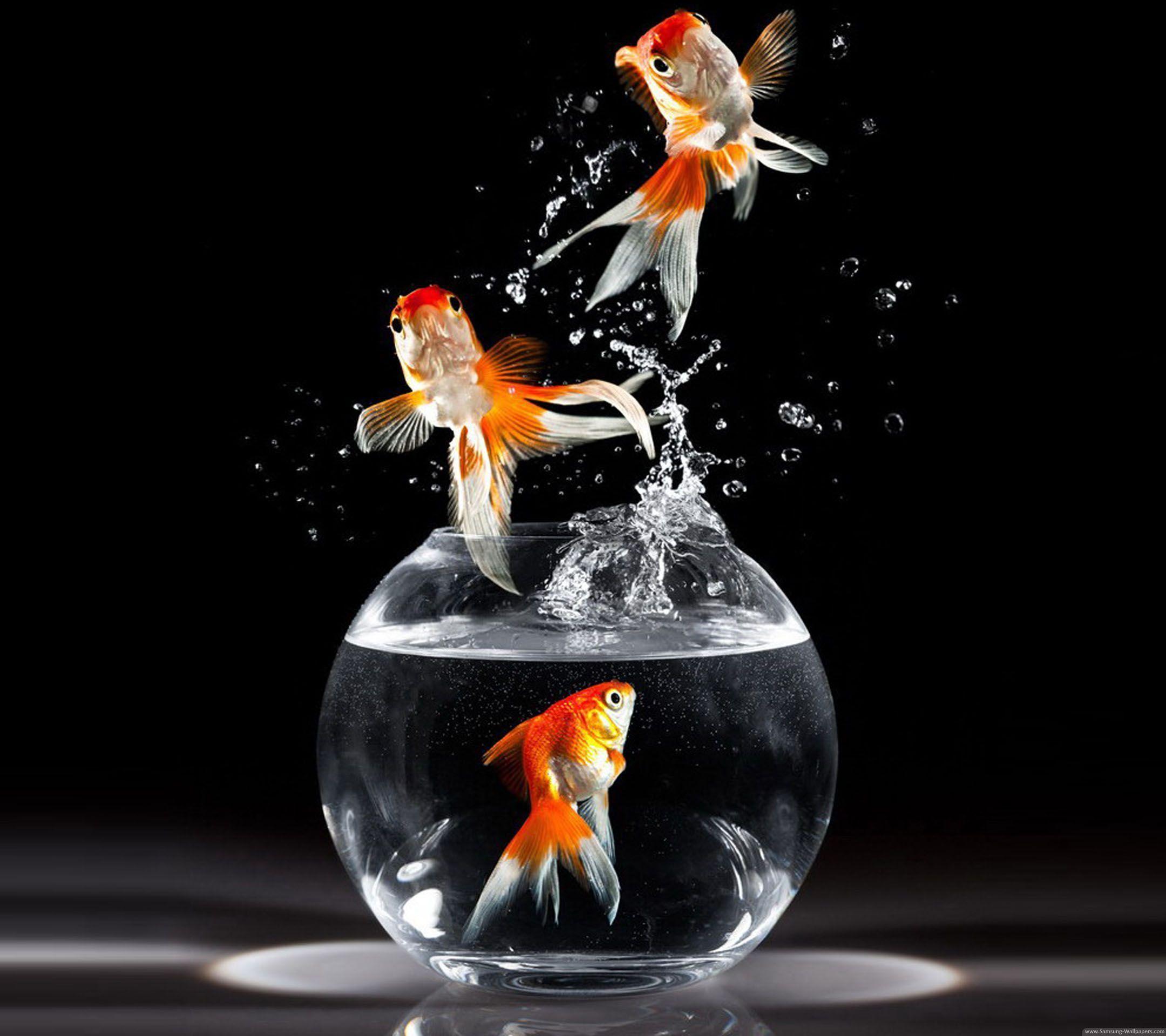 Goldfish Wallpapers