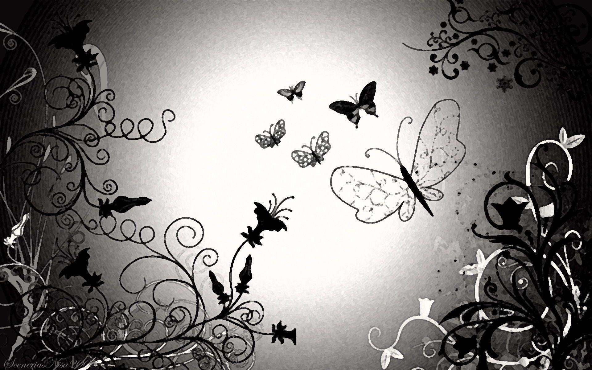 Black And White Butterfly Wallpapers 14882 Full HD Wallpapers