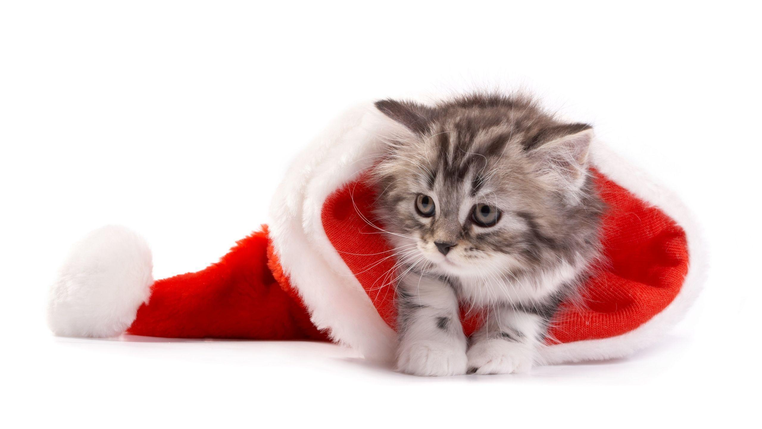 Pics For > Cute Christmas Kittens Wallpaper
