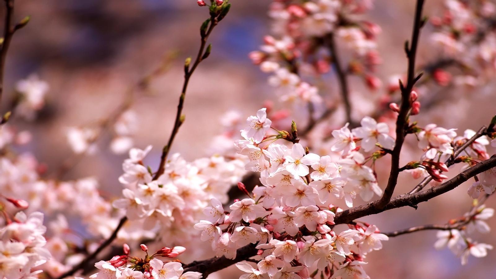 картинки весна обои на телефон организации раздела перевозки