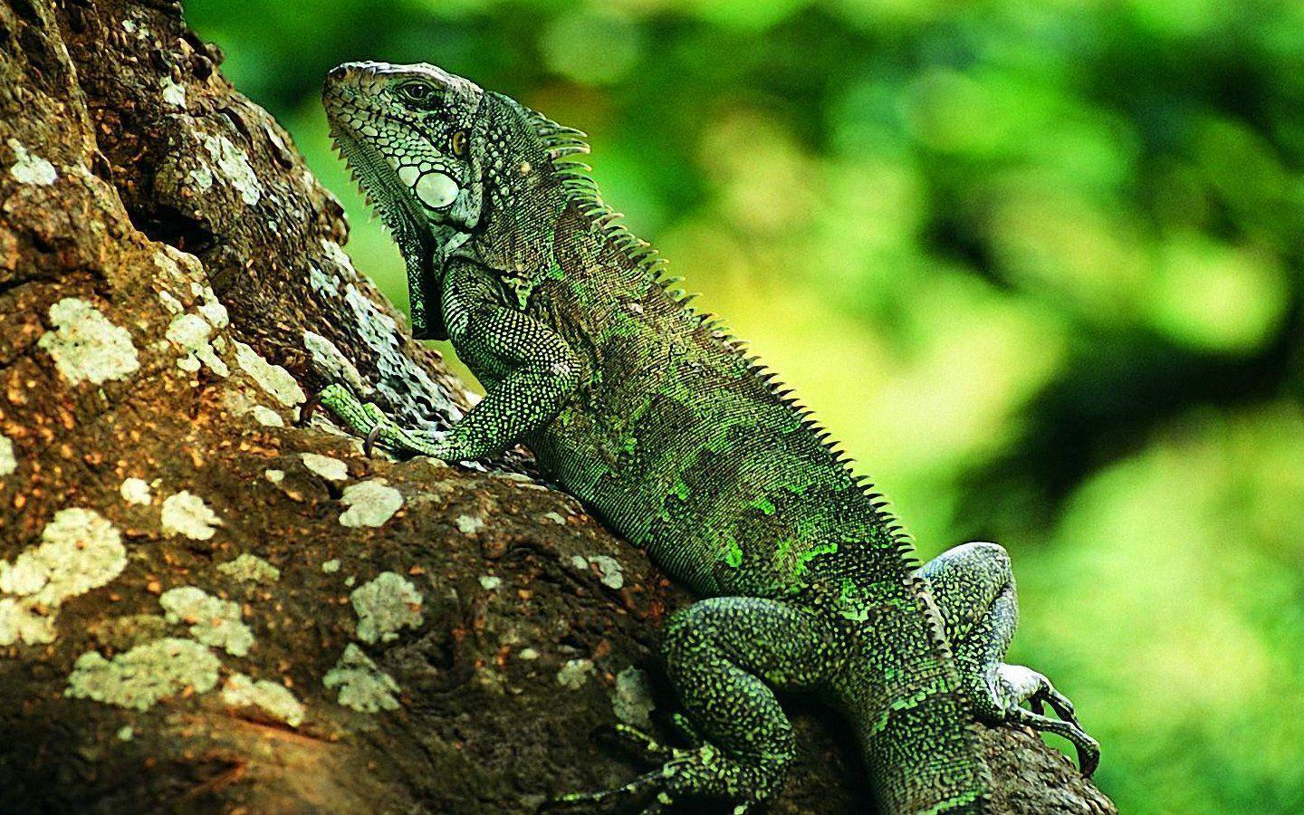 22 reptile hd wallpapers - photo #7