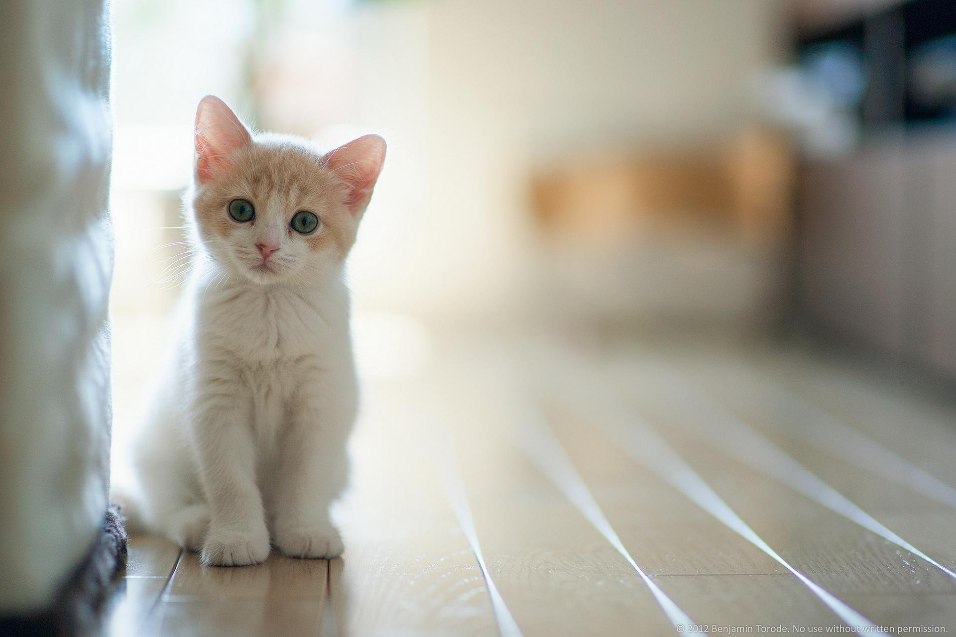 Cute <b>Images</b> Of <b>Cat</b> - <b>wallpaper hd</b>