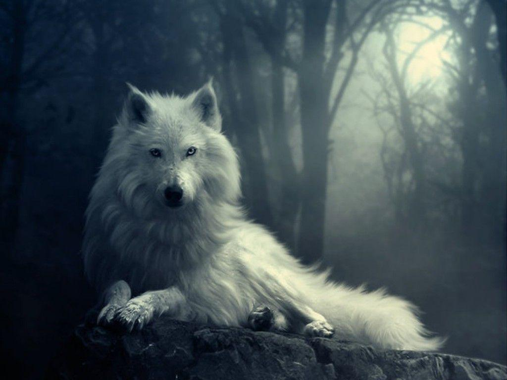 Cool Wolf Backgrounds